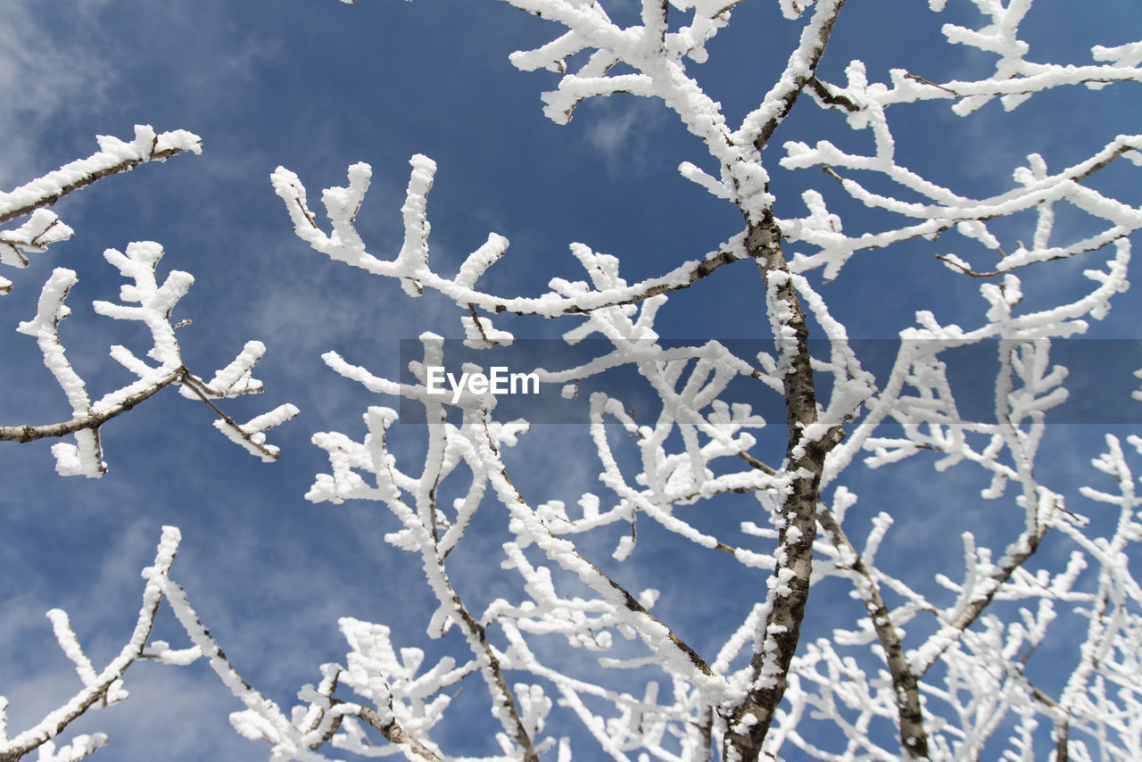 winter, cold temperature, nature, snow, day, no people, frozen, beauty in nature, outdoors, weather, ice, branch, frost, sunlight, close-up, tree, plant, fragility, flower, sky