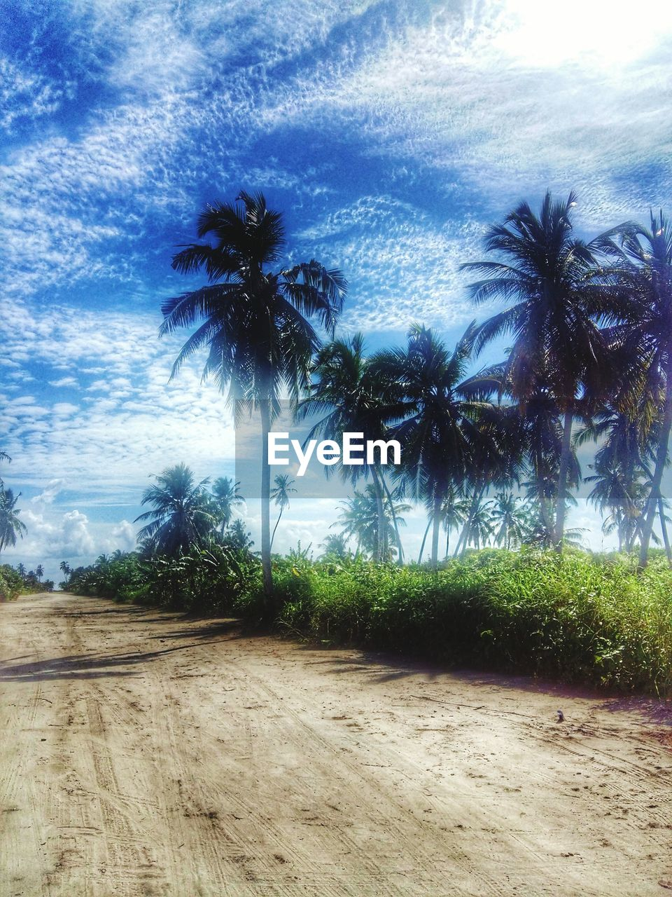 palm tree, tree, sky, no people, cloud - sky, beauty in nature, nature, growth, scenics, beach, tranquility, outdoors, day, landscape, sea