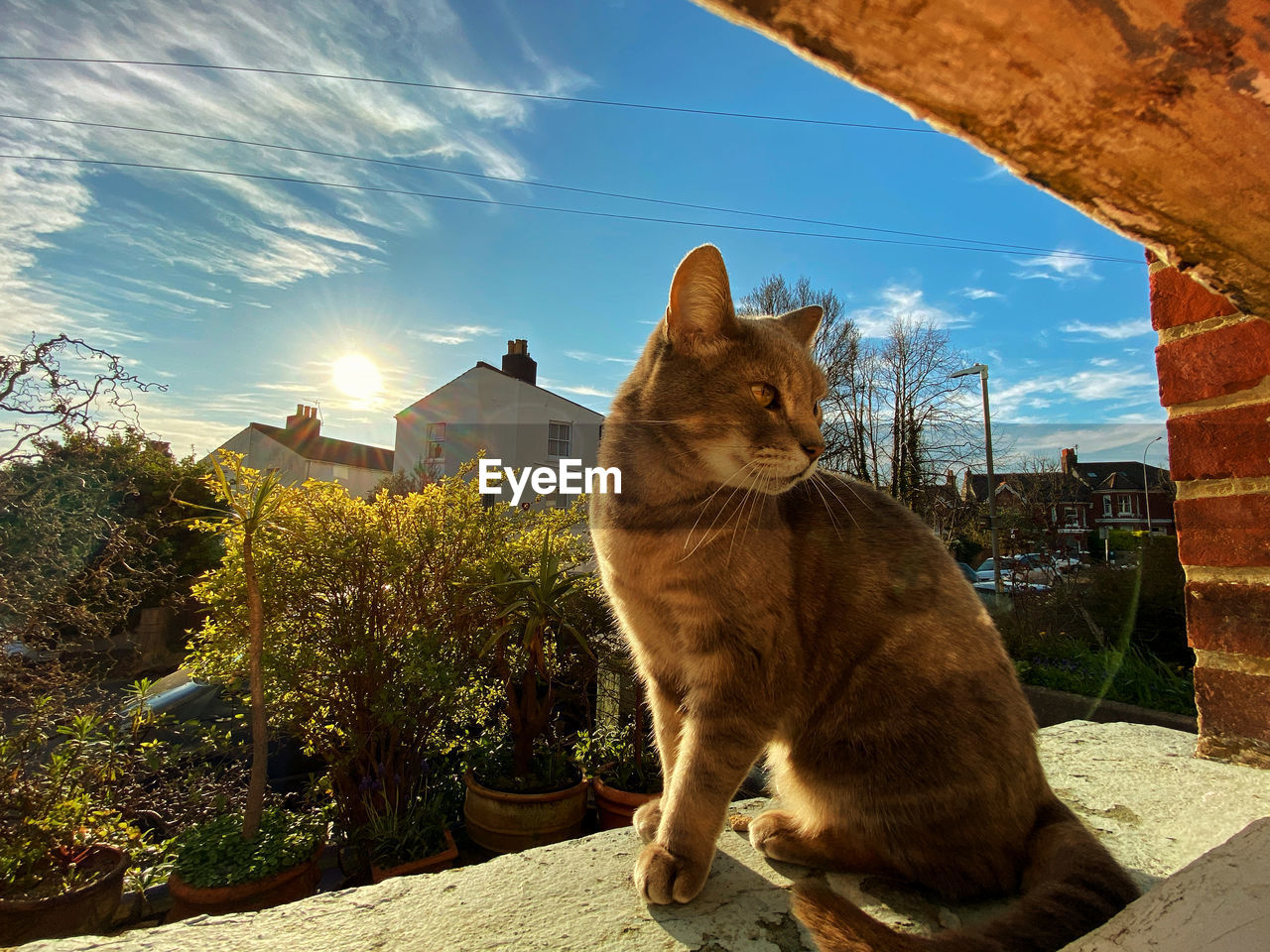 VIEW OF A CAT LOOKING AT VIEW