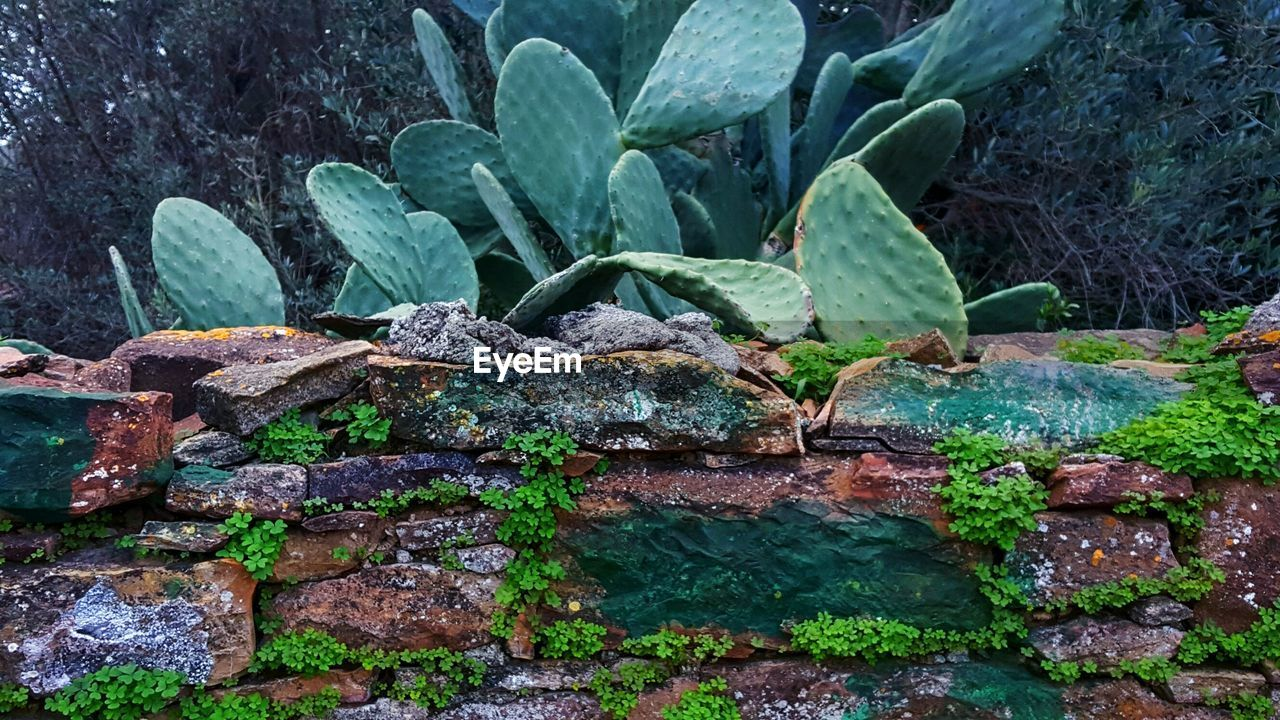 growth, plant, green color, no people, rock - object, outdoors, nature, day, leaf, beauty in nature, tree, close-up, freshness