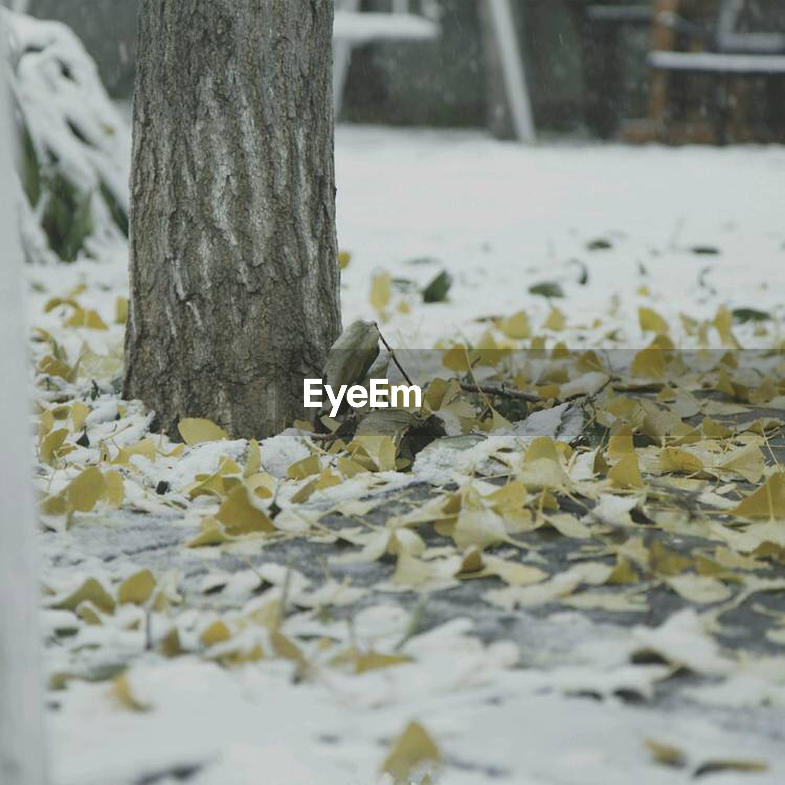 season, winter, snow, cold temperature, focus on foreground, selective focus, close-up, covering, nature, dry, weather, surface level, frozen, day, outdoors, tree trunk, leaf, white color, fallen, covered