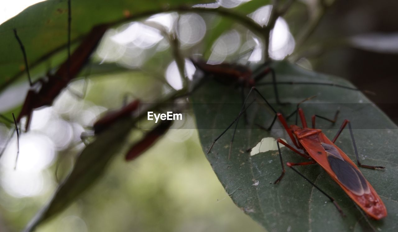 leaf, close-up, green color, red, no people, day, nature, growth, outdoors, animal themes