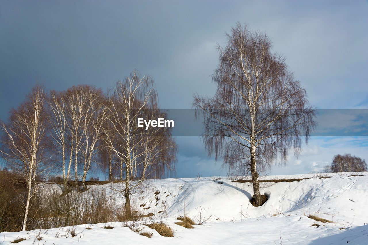 winter, snow, cold temperature, tree, beauty in nature, sky, tranquility, bare tree, plant, tranquil scene, scenics - nature, covering, non-urban scene, no people, white color, nature, landscape, land, environment, outdoors, cold, snowcapped mountain