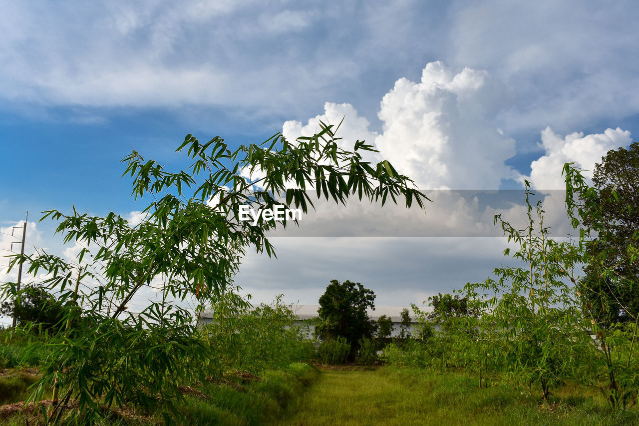 cloud - sky, sky, plant, tree, beauty in nature, tranquility, growth, tranquil scene, green color, nature, scenics - nature, no people, land, non-urban scene, day, environment, field, outdoors, low angle view, tropical climate