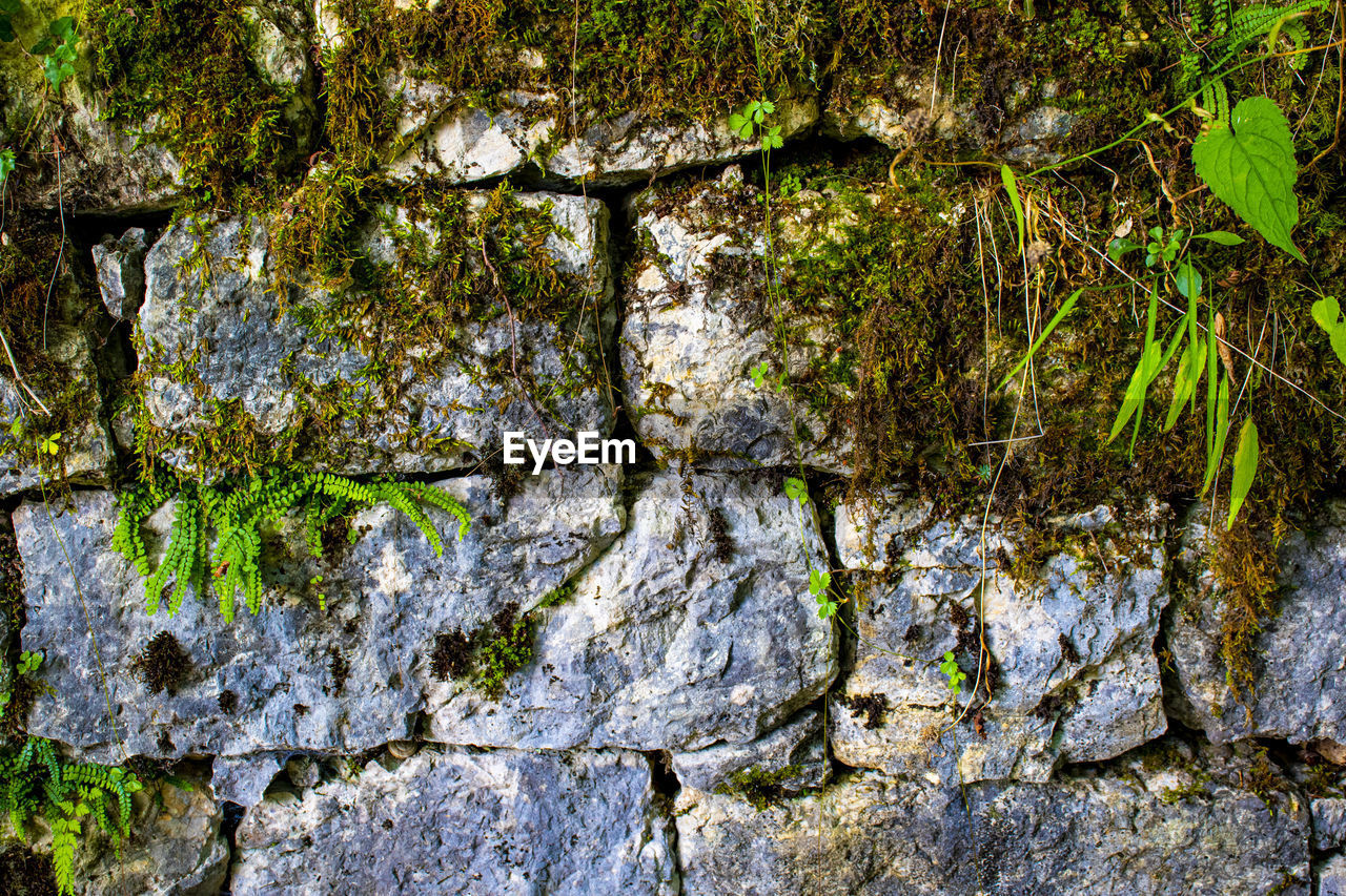 rock, nature, plant, no people, rock - object, moss, growth, solid, tree, day, textured, full frame, outdoors, backgrounds, close-up, beauty in nature, water, rough, tree trunk, lichen