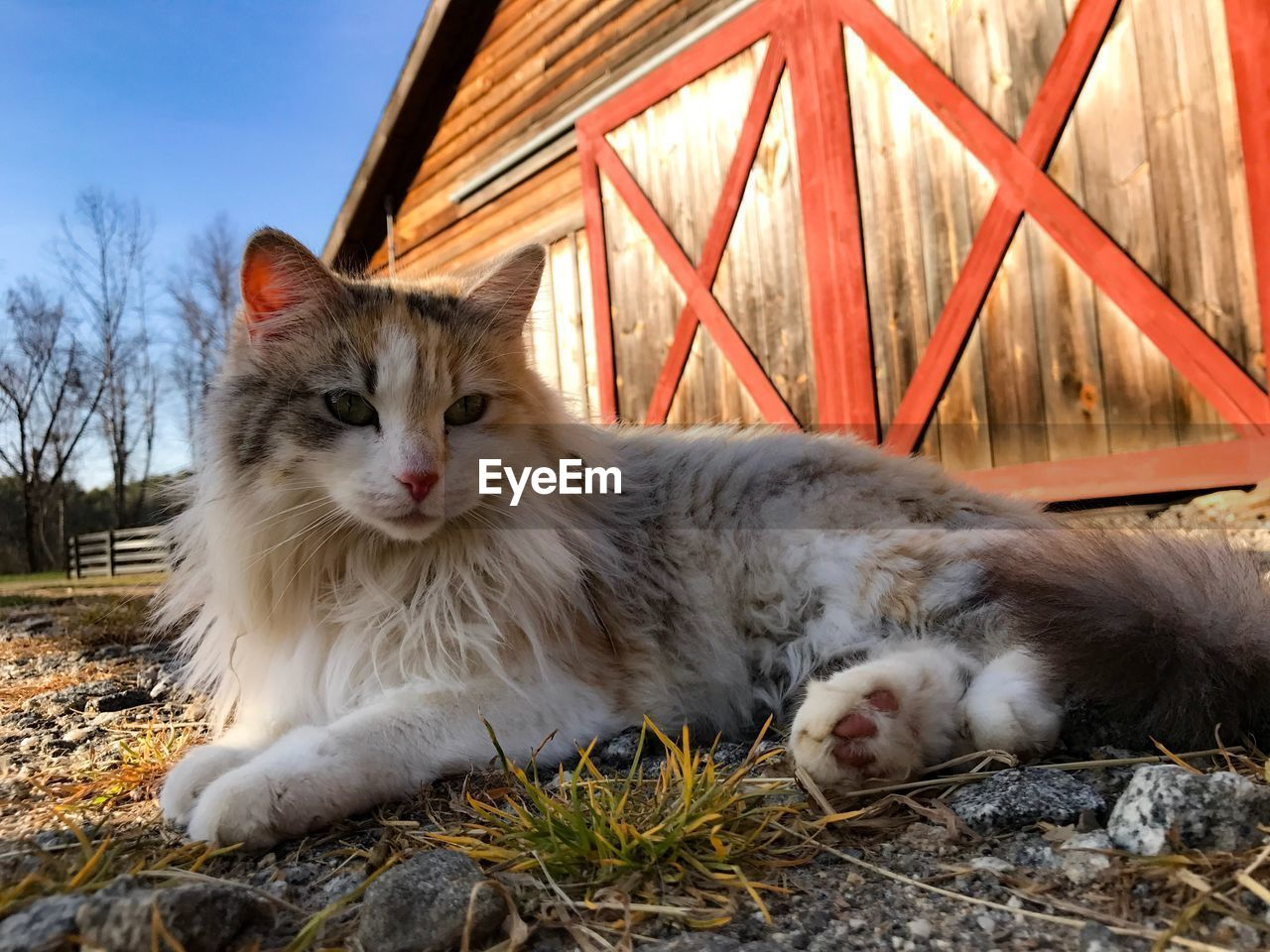 domestic cat, animal themes, domestic animals, pets, mammal, one animal, feline, cat, relaxation, whisker, no people, outdoors, day, lying down, portrait, nature, sky