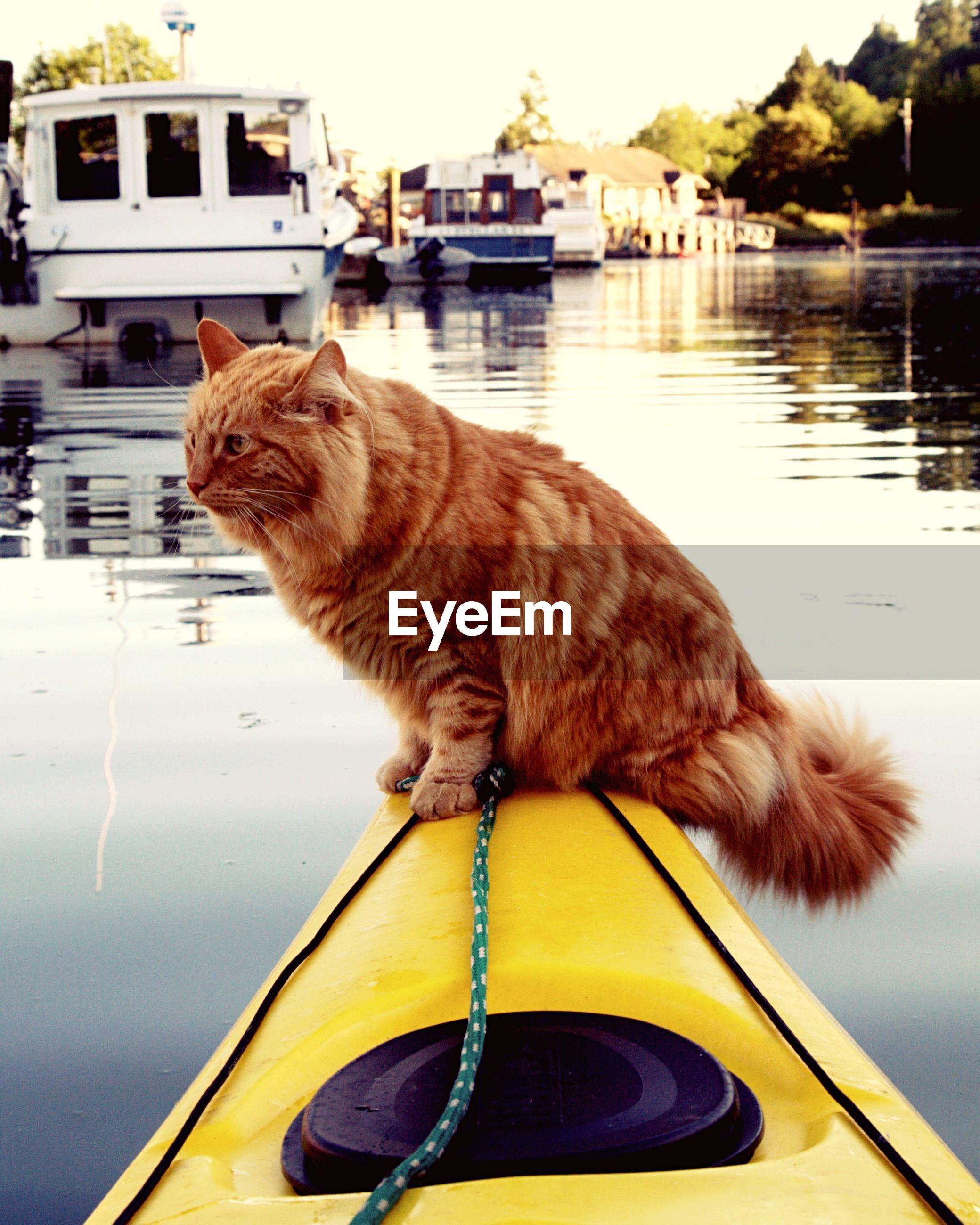Cat sitting on kayak moored in river against sky