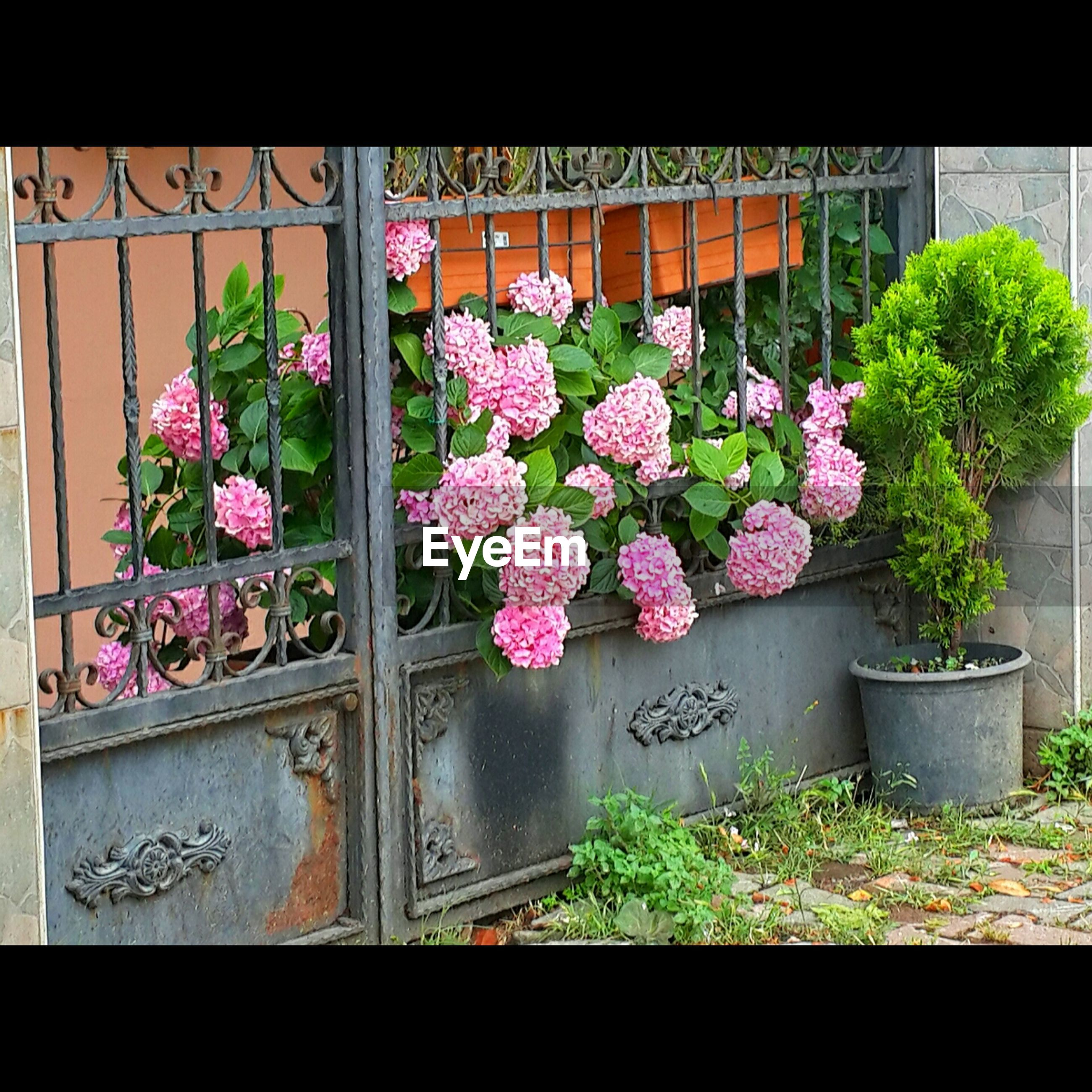 flower, freshness, growth, plant, fragility, potted plant, beauty in nature, nature, flower pot, built structure, petal, blooming, pink color, architecture, leaf, blossom, in bloom, building exterior, house, window