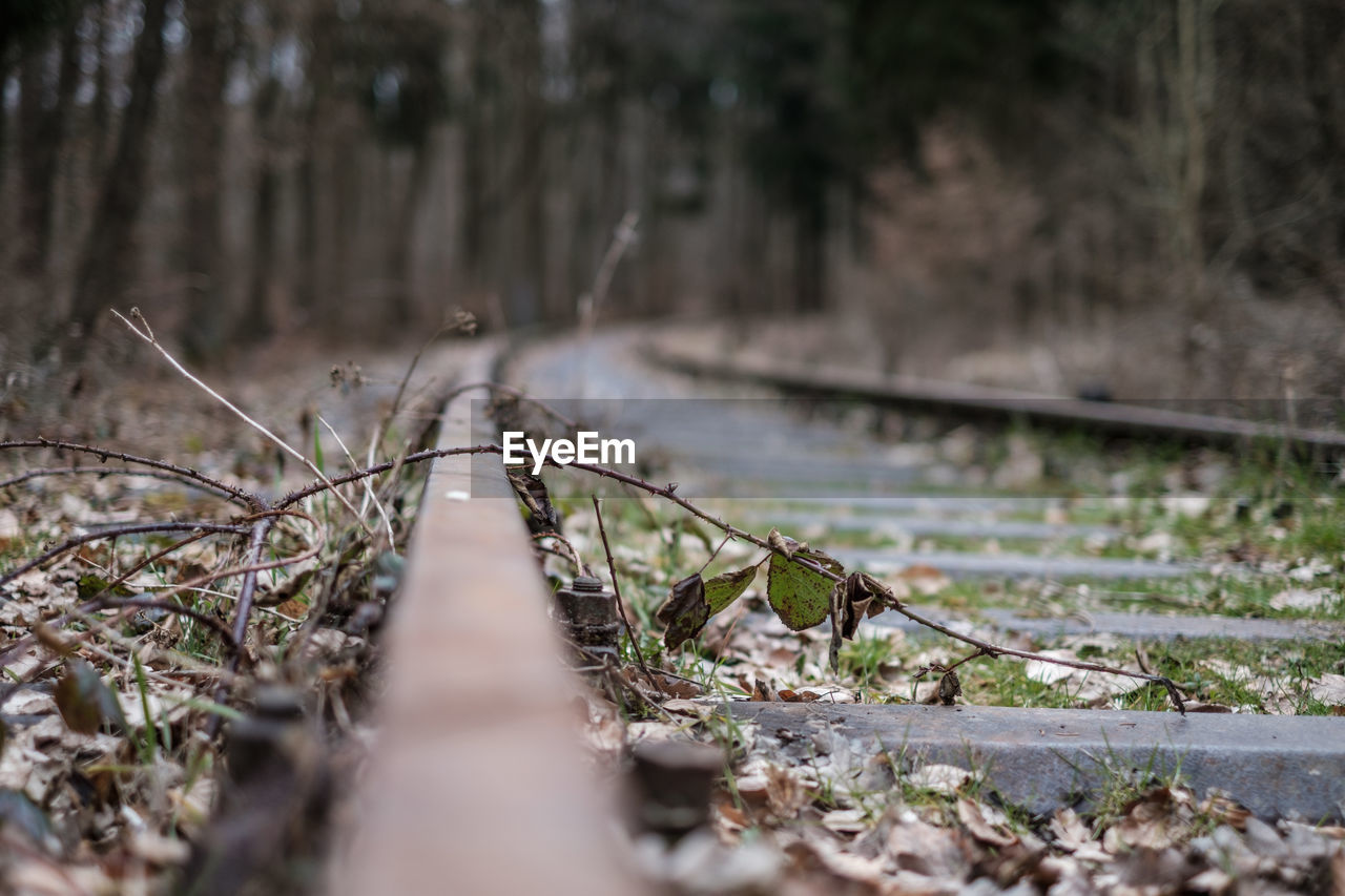 the way forward, direction, railroad track, rail transportation, selective focus, track, transportation, nature, tree, no people, land, day, plant, forest, diminishing perspective, tranquility, outdoors, travel, growth, metal, surface level, gravel, long