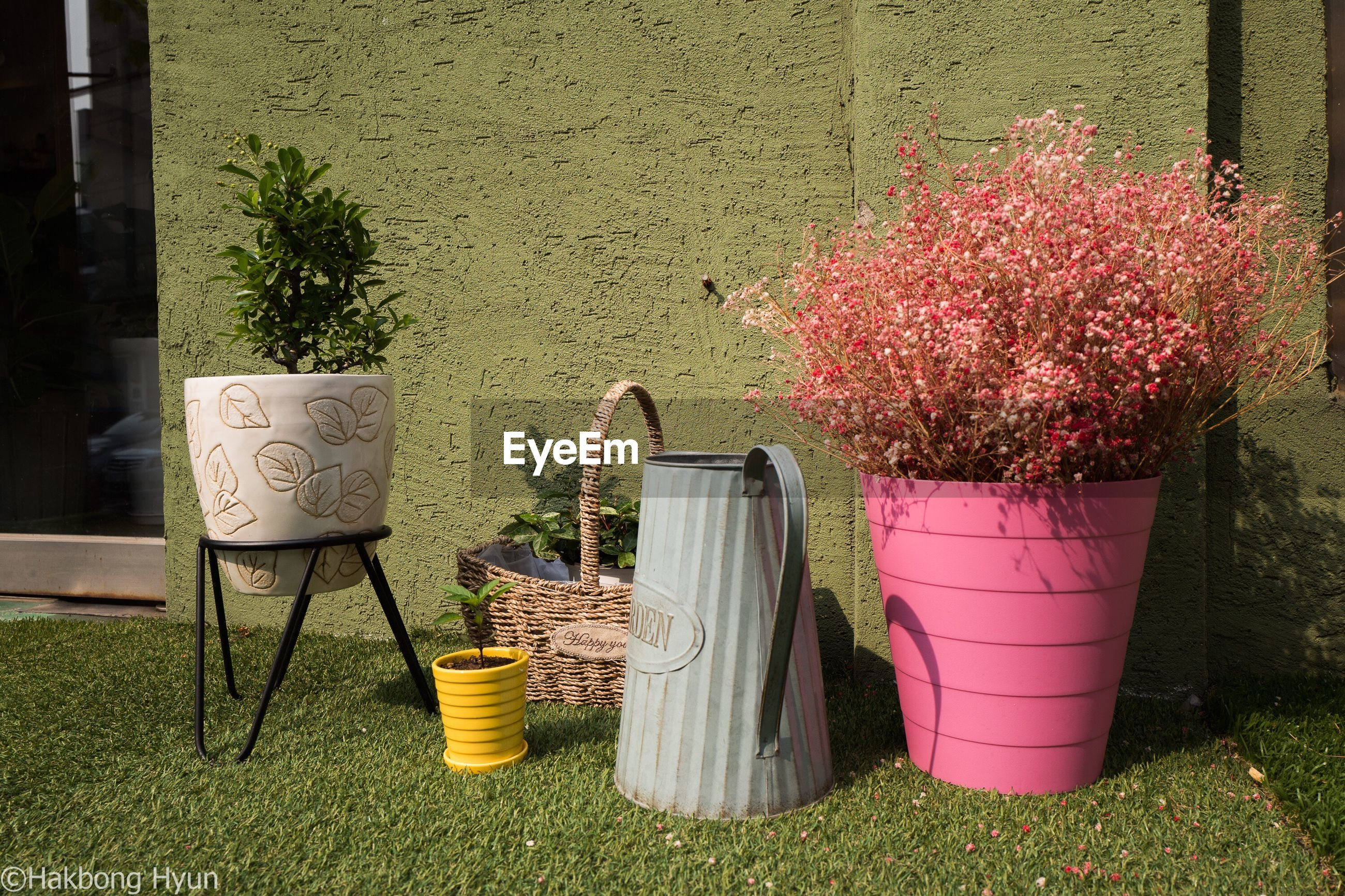 potted plant, growth, flower, plant, day, watering can, chair, no people, pink color, outdoors, architecture, grass, nature, tree