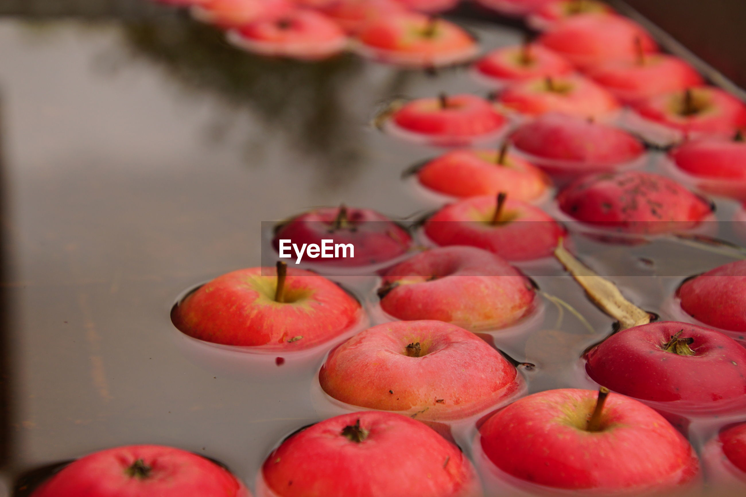 High angle view of apples in water