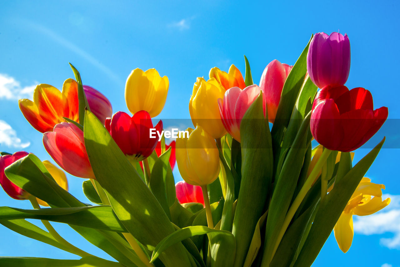 flowering plant, flower, beauty in nature, vulnerability, fragility, plant, freshness, petal, tulip, flower head, close-up, nature, inflorescence, growth, yellow, sky, no people, leaf, plant part, multi colored, springtime, outdoors, flower arrangement, bouquet, bunch of flowers, purple