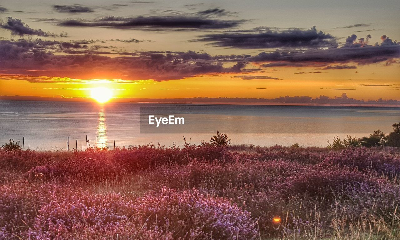 sunset, beauty in nature, sky, plant, scenics - nature, orange color, flower, cloud - sky, tranquility, tranquil scene, nature, growth, no people, flowering plant, water, idyllic, sun, land, outdoors, purple
