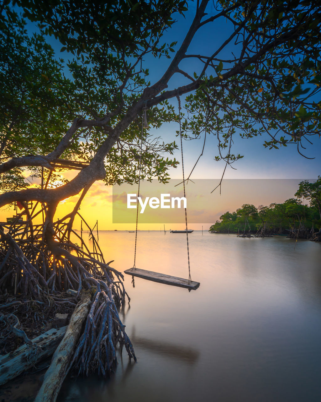 tree, water, plant, sky, nature, no people, tranquility, tranquil scene, beauty in nature, scenics - nature, sunset, growth, non-urban scene, lake, reflection, outdoors, sunlight, branch
