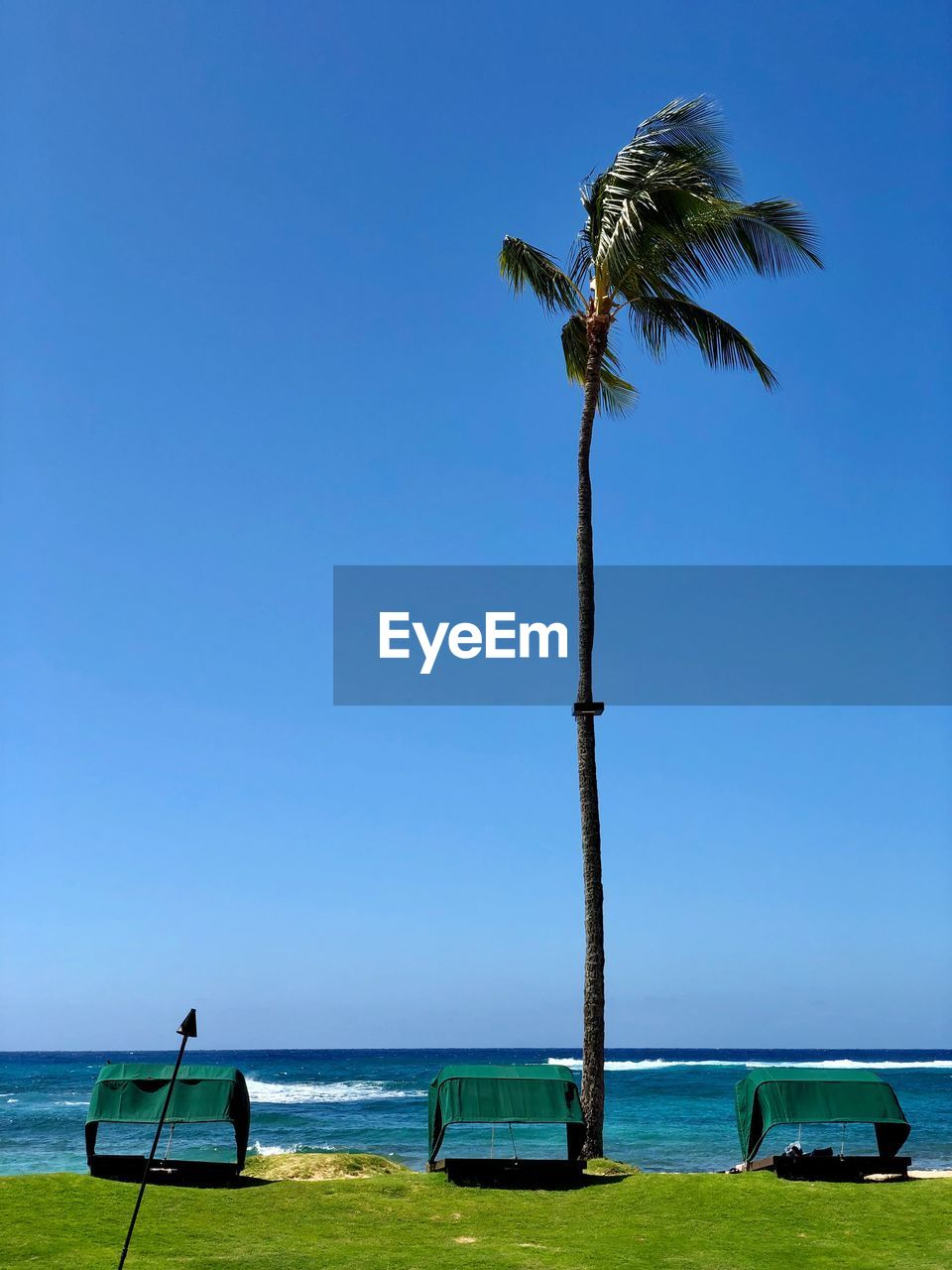sky, tropical climate, water, palm tree, sea, land, plant, horizon over water, beauty in nature, beach, scenics - nature, nature, tree, horizon, clear sky, day, blue, tranquility, copy space, coconut palm tree, no people, outdoors, tropical tree