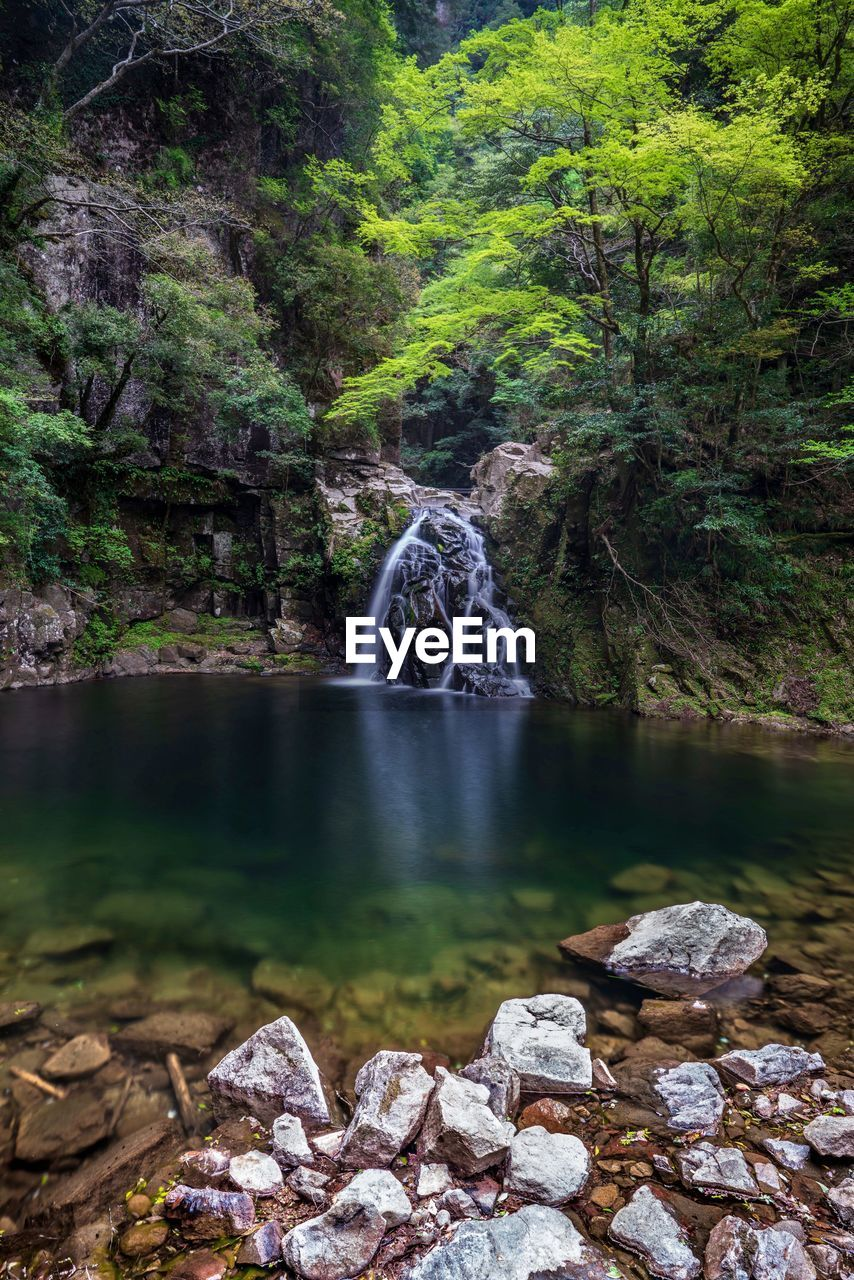 water, forest, tree, long exposure, motion, solid, plant, scenics - nature, rock, land, rock - object, flowing water, nature, beauty in nature, blurred motion, no people, day, river, tranquility, flowing, outdoors, power in nature, stream - flowing water, rainforest