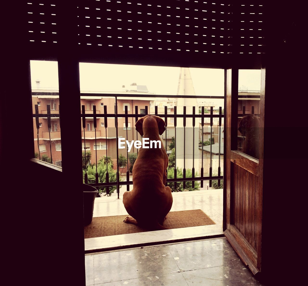 mammal, window, domestic, domestic animals, pets, one animal, indoors, sitting, glass - material, vertebrate, transparent, day, dog, architecture, no people, canine, home interior, flooring