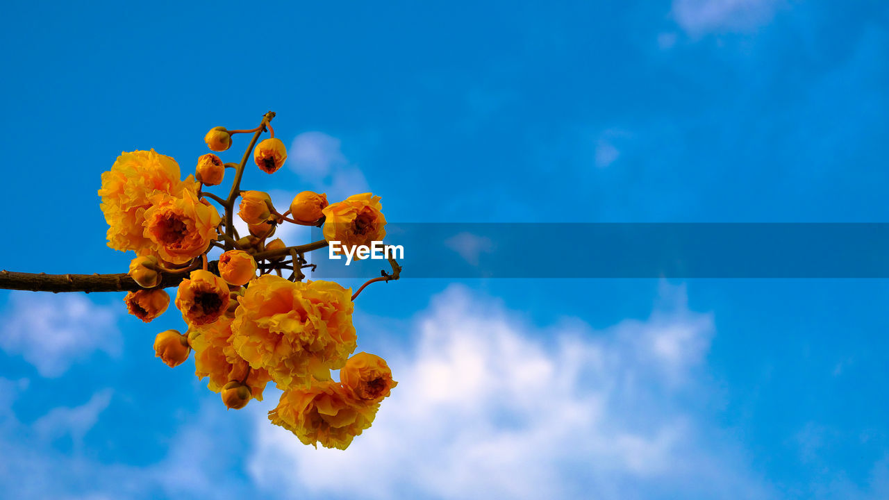 LOW ANGLE VIEW OF ORANGE PLANT AGAINST BLUE SKY