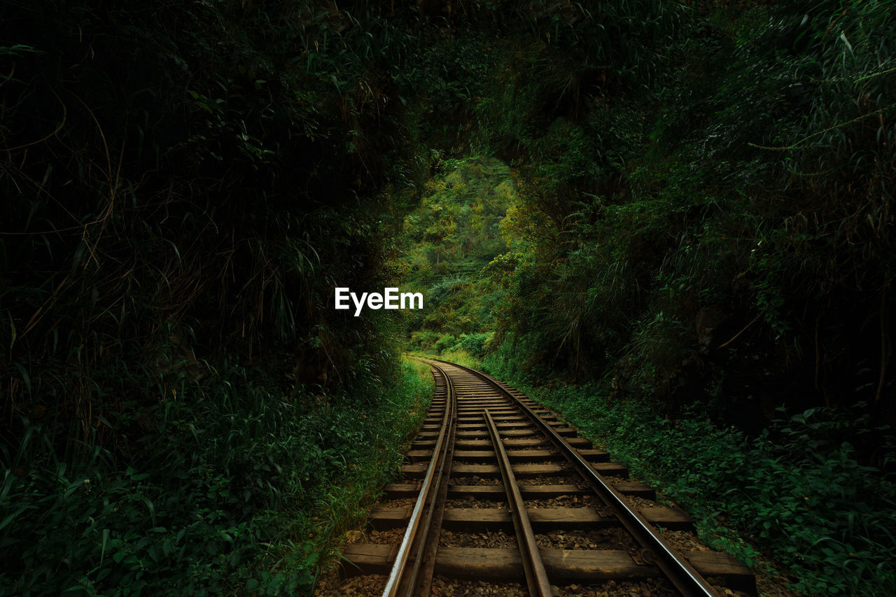 railroad track, rail transportation, track, the way forward, plant, direction, tree, transportation, no people, nature, growth, forest, diminishing perspective, green color, beauty in nature, land, day, vanishing point, tranquility, outdoors, long, parallel