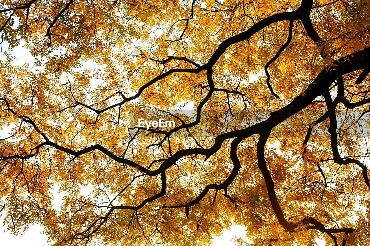 tree, branch, nature, low angle view, beauty in nature, full frame, outdoors, no people, day, growth, autumn, tree trunk, forest, scenics, sky