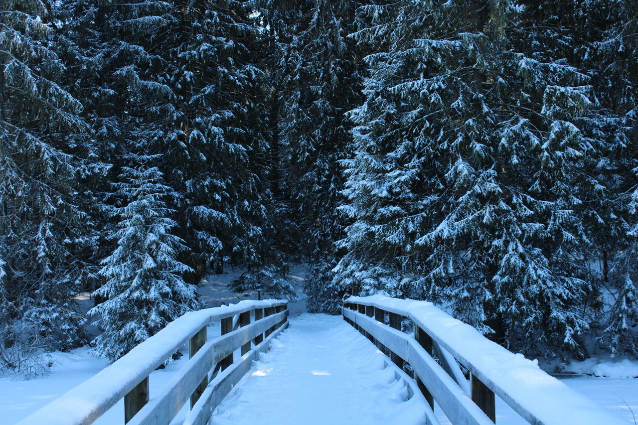 snow, cold temperature, winter, tree, plant, scenics - nature, nature, the way forward, land, beauty in nature, direction, tranquility, white color, tranquil scene, no people, covering, forest, transportation, day, diminishing perspective, outdoors, extreme weather, snowing, snowcapped mountain