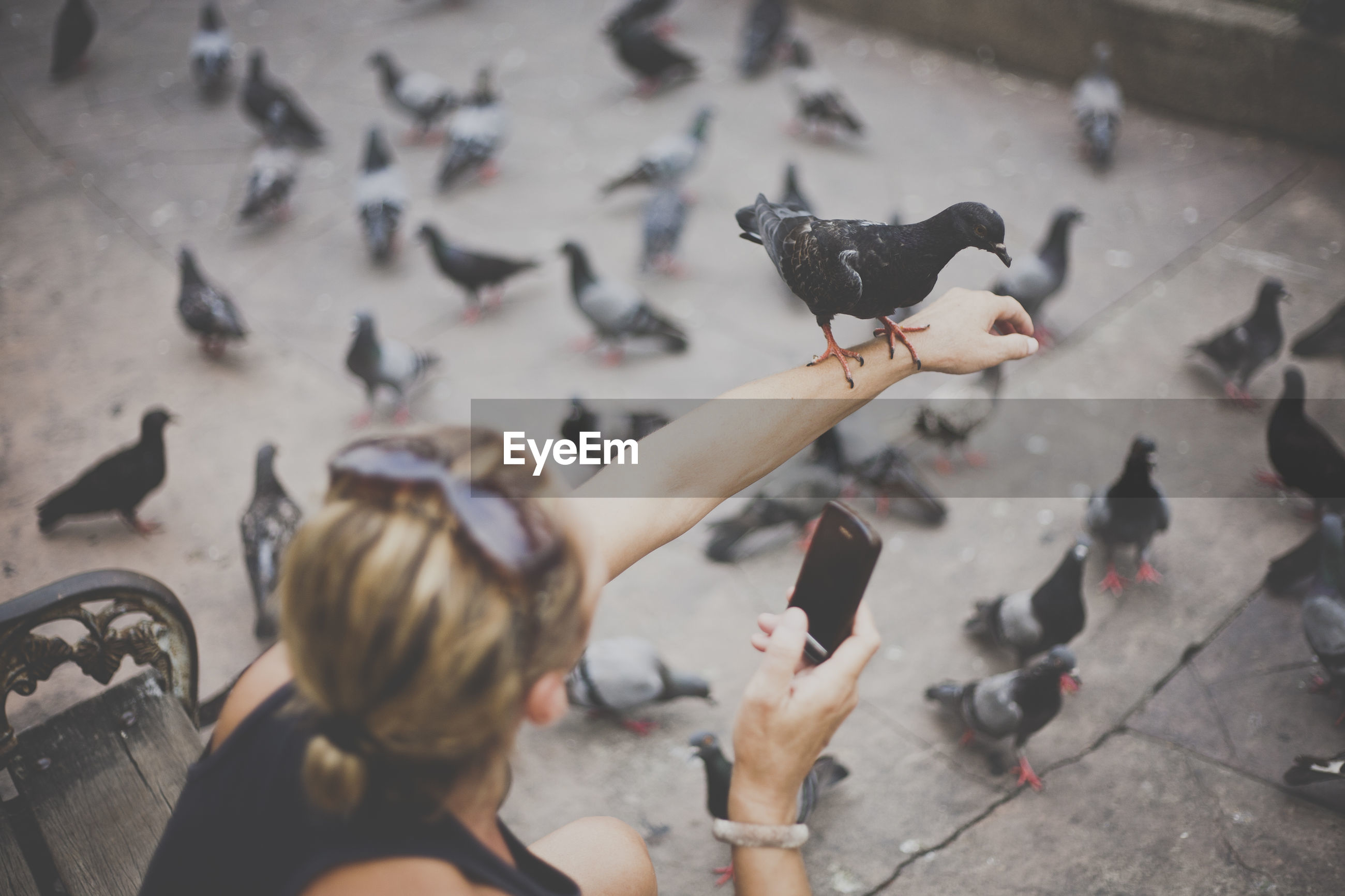 High angle view of woman photographing pigeons while sitting on bench
