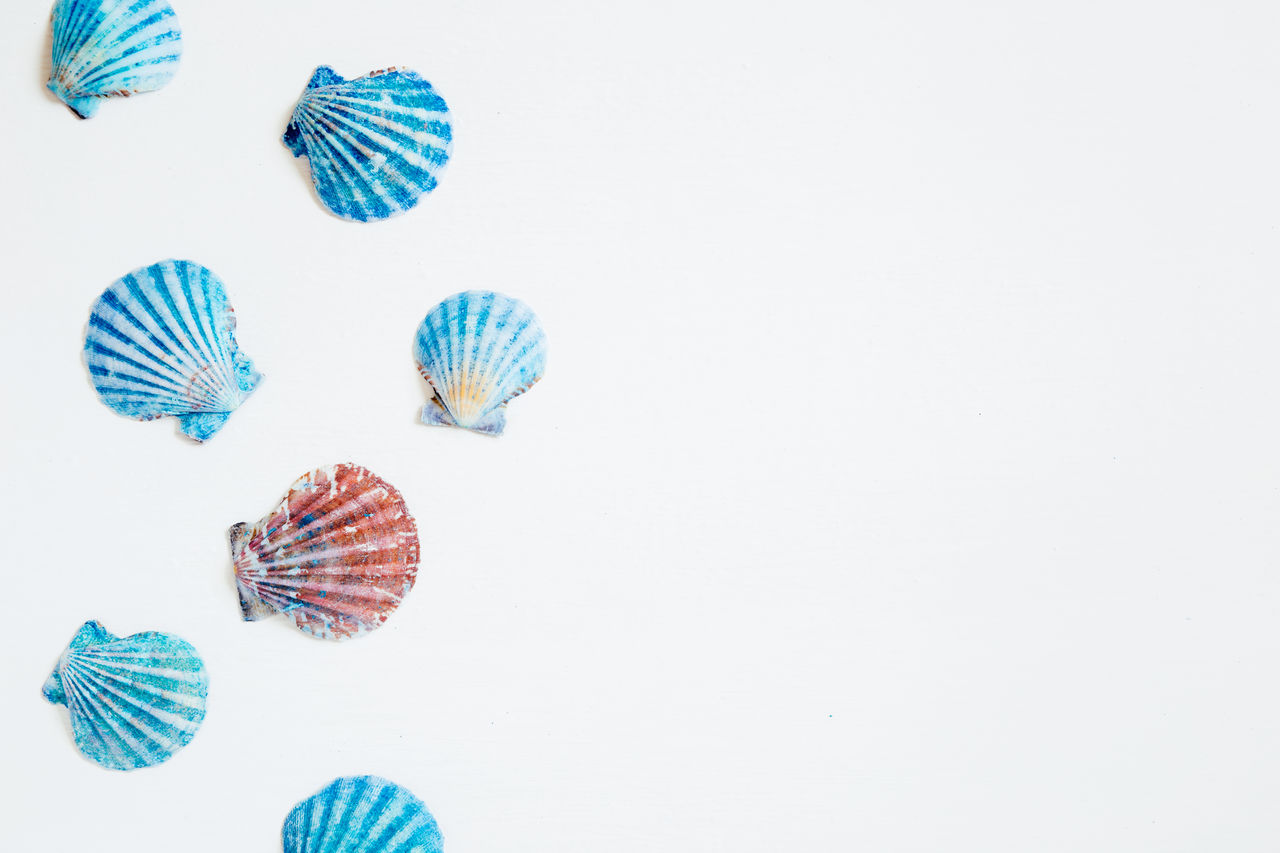 copy space, studio shot, no people, indoors, shell, animal, animal wildlife, striped, pattern, fish, still life, sea, seashell, variation, white background, underwater, choice, cut out, animal themes, animal shell, marine