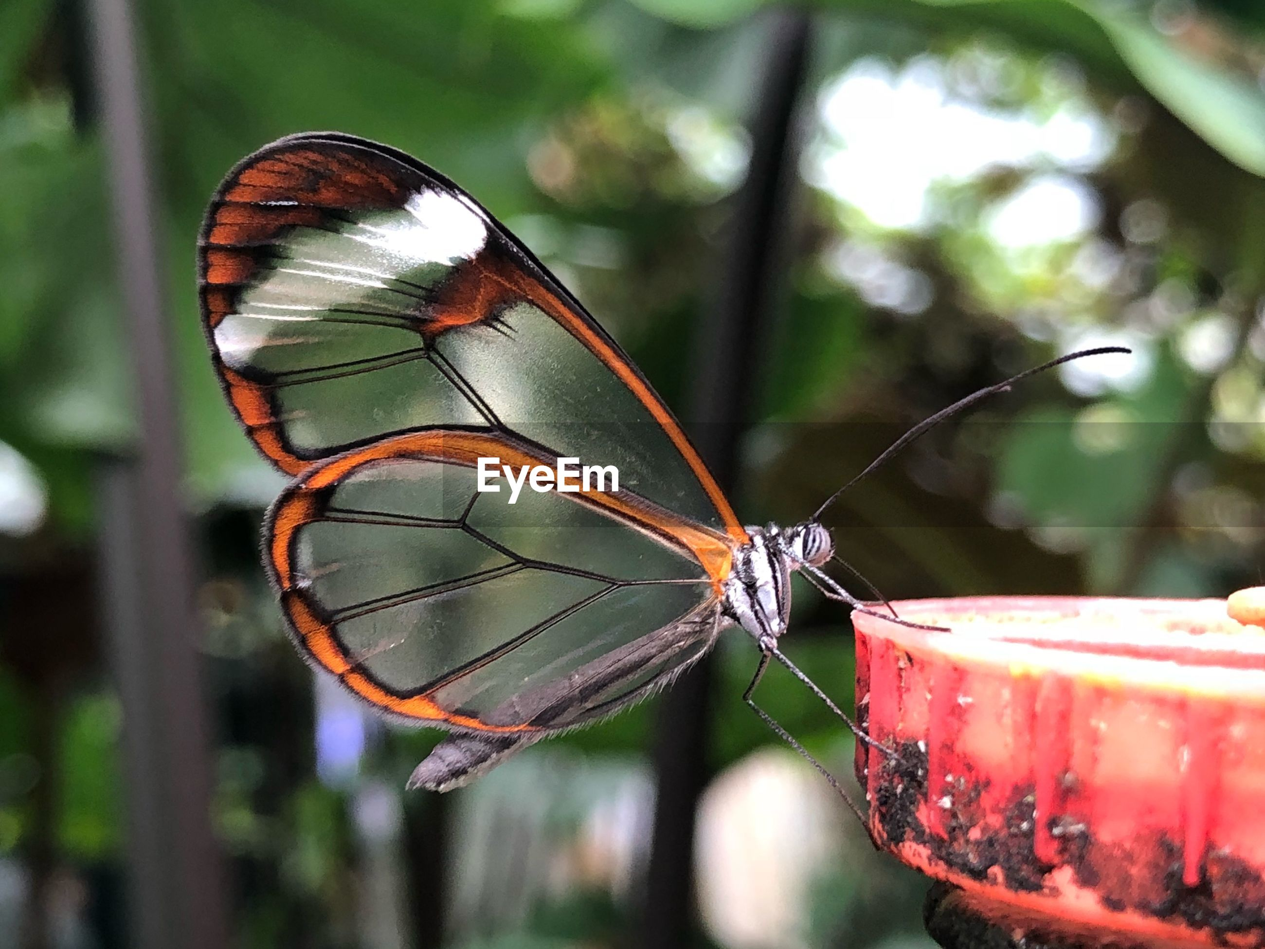 Close-up of butterfly on metal