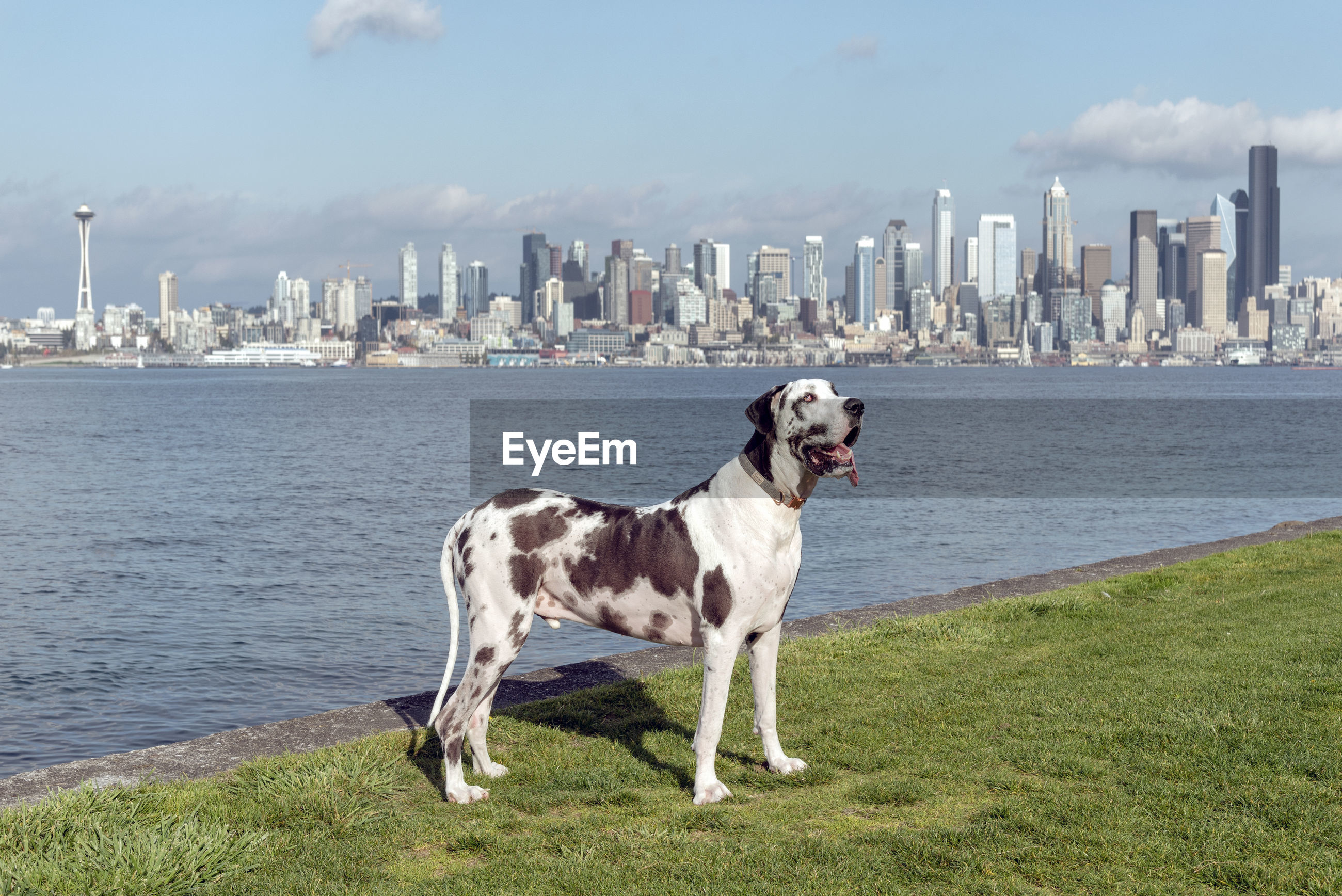 Dog standing on field by river in city against sky