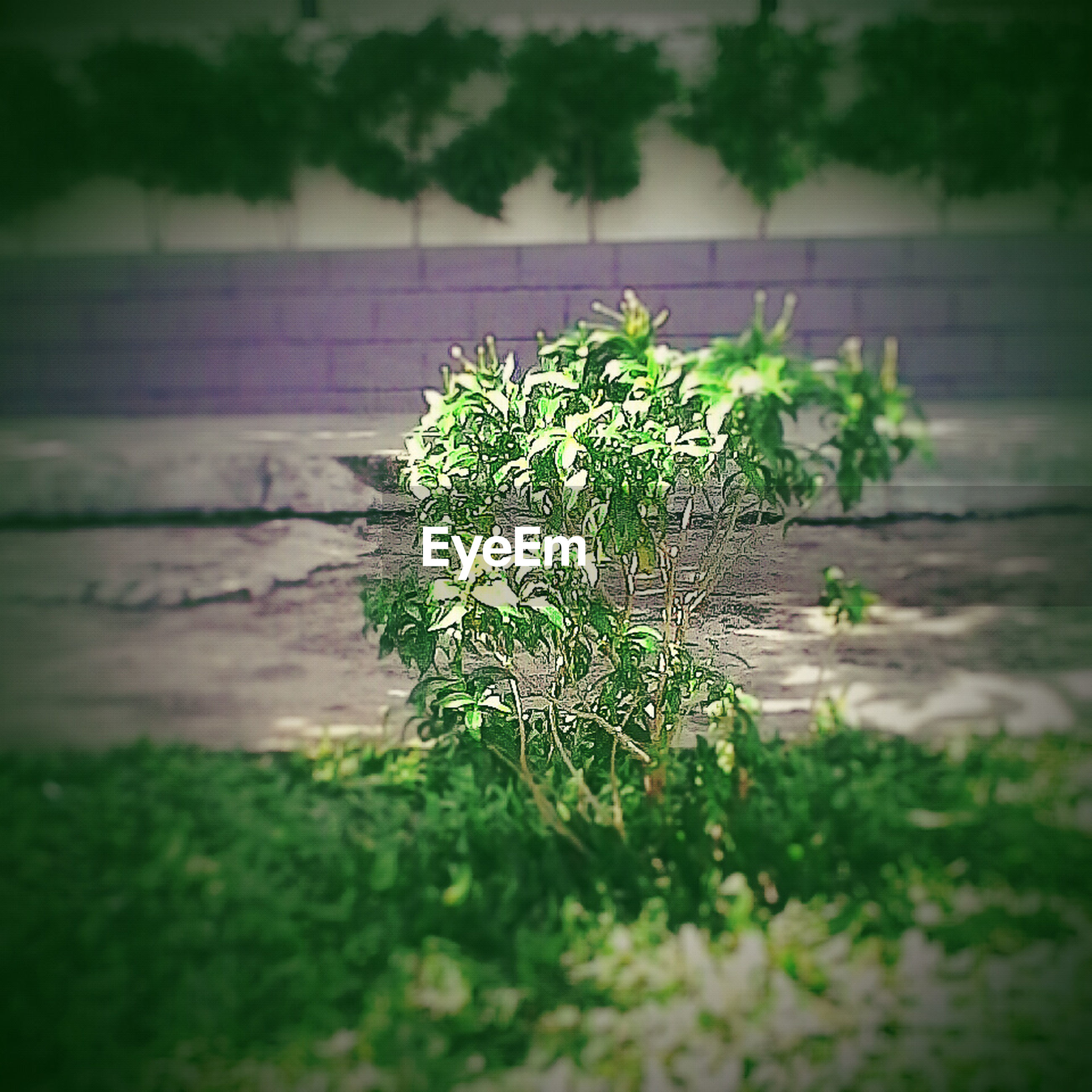 green color, growth, plant, selective focus, nature, close-up, leaf, focus on foreground, growing, freshness, green, beauty in nature, outdoors, day, no people, water, grass, potted plant, fragility, high angle view