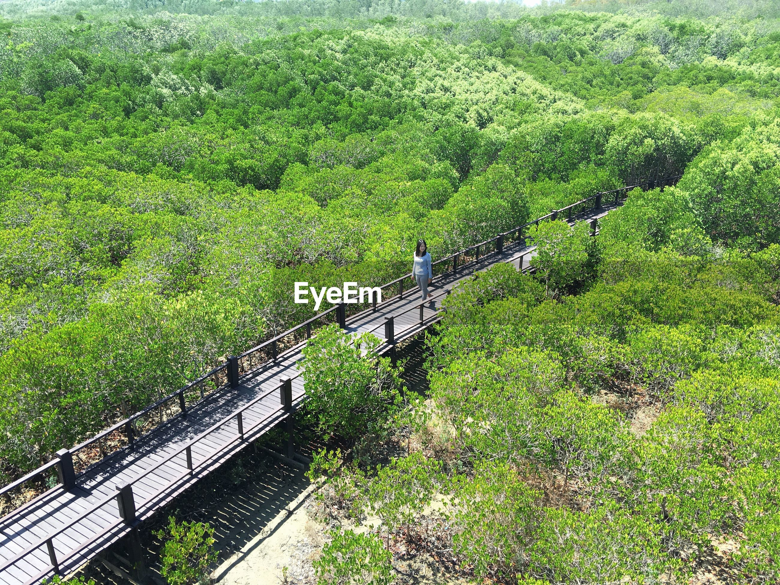 High angle view of woman walking on footbridge in forest