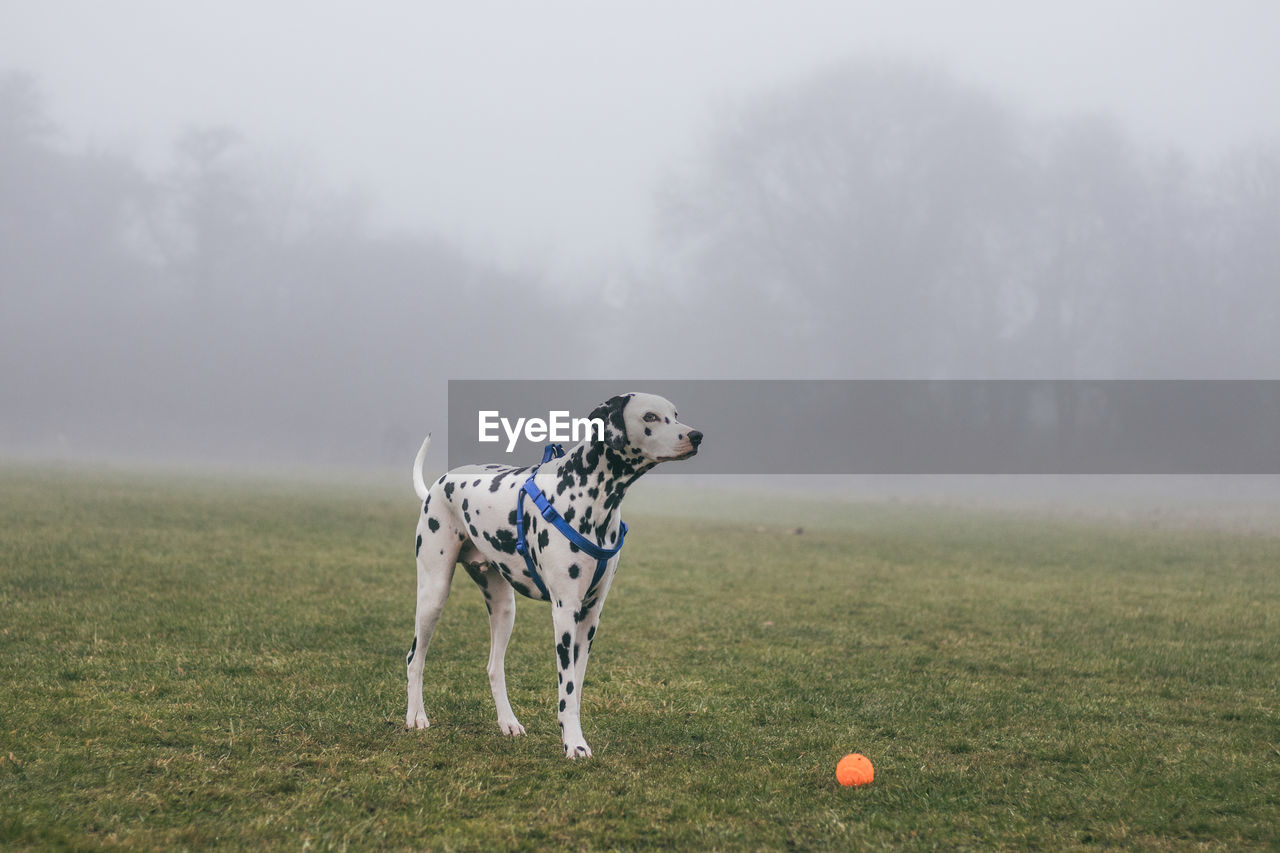 Dog Standing On Grassy Field During Foggy Weather