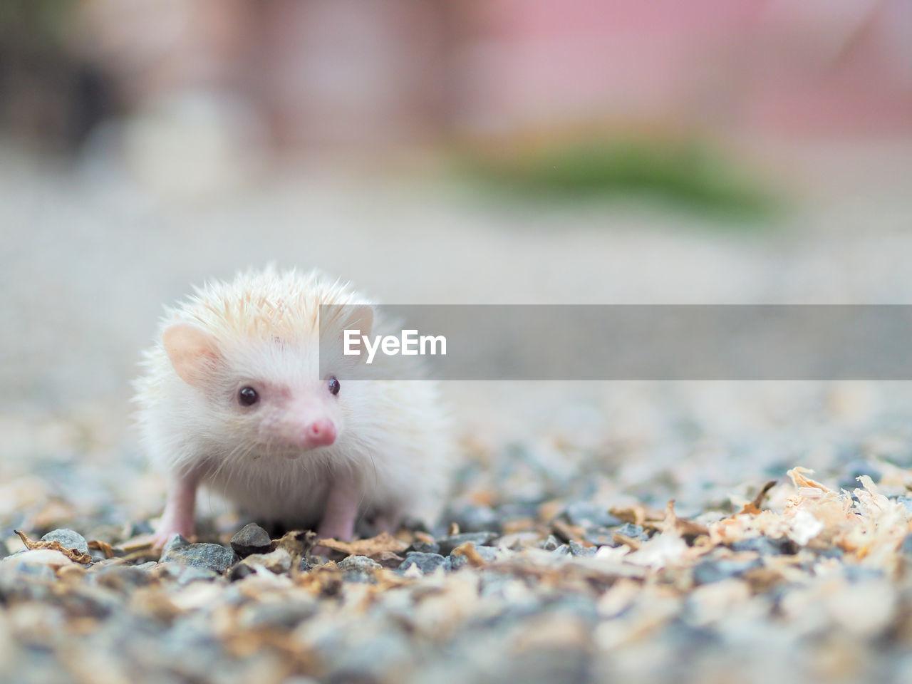 Close-up portrait of a hedgehog