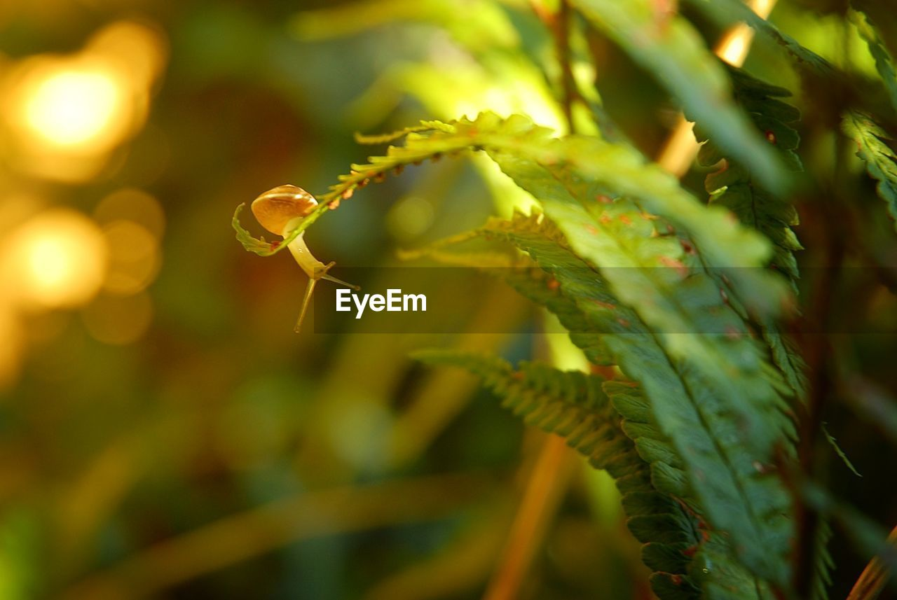 Close-Up Of Young Snail On Fern