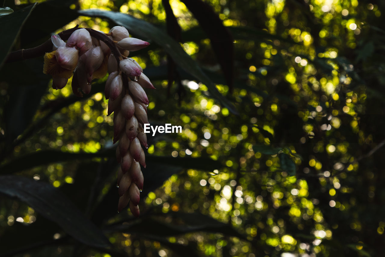 plant, tree, growth, beauty in nature, freshness, flowering plant, close-up, nature, flower, focus on foreground, no people, day, vulnerability, branch, fragility, selective focus, low angle view, outdoors, sunlight, leaf