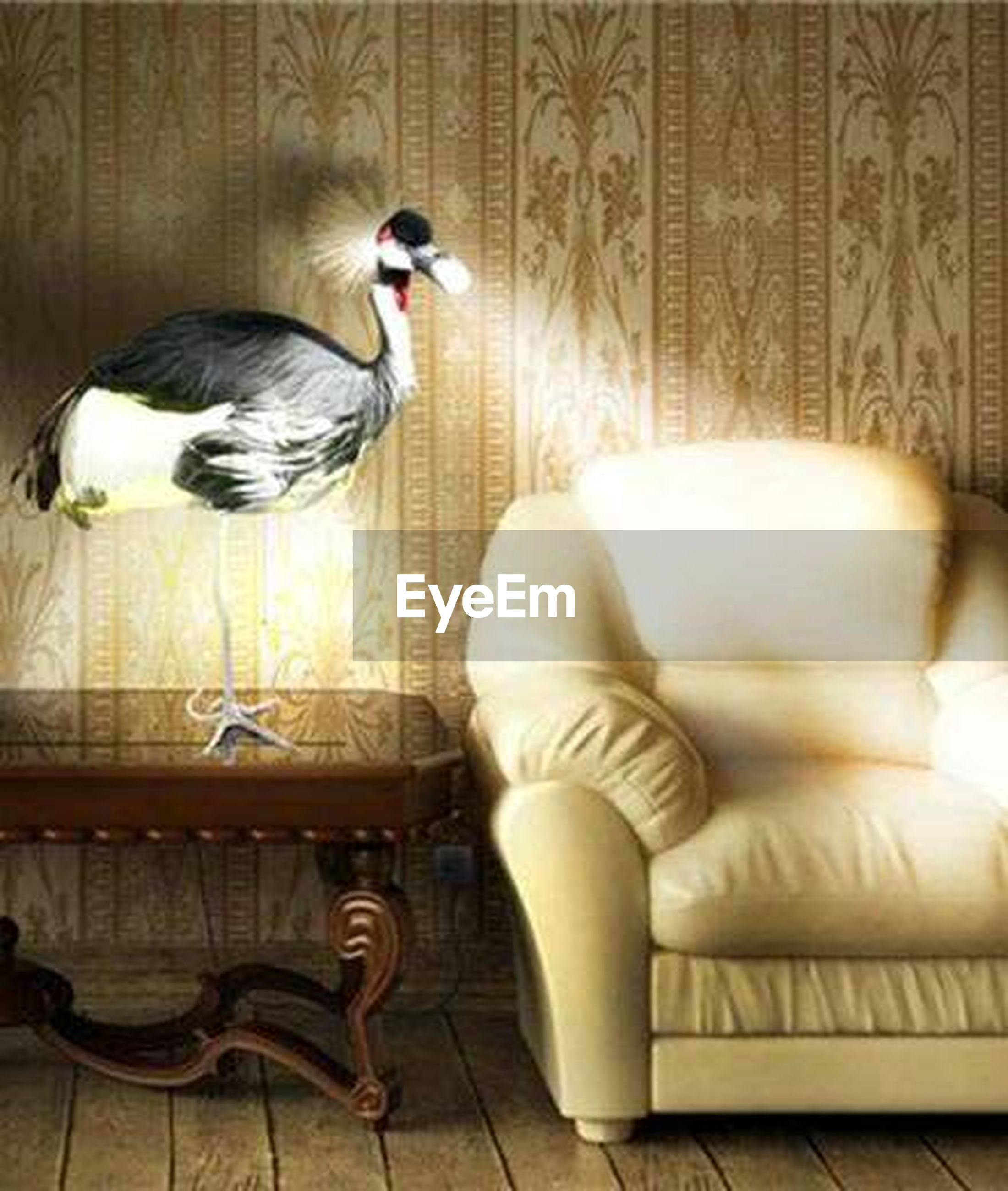 animal themes, bird, indoors, one animal, animals in the wild, wildlife, perching, wood - material, no people, two animals, relaxation, high angle view, day, chair, full length, table, flooring, pigeon, close-up, wall - building feature