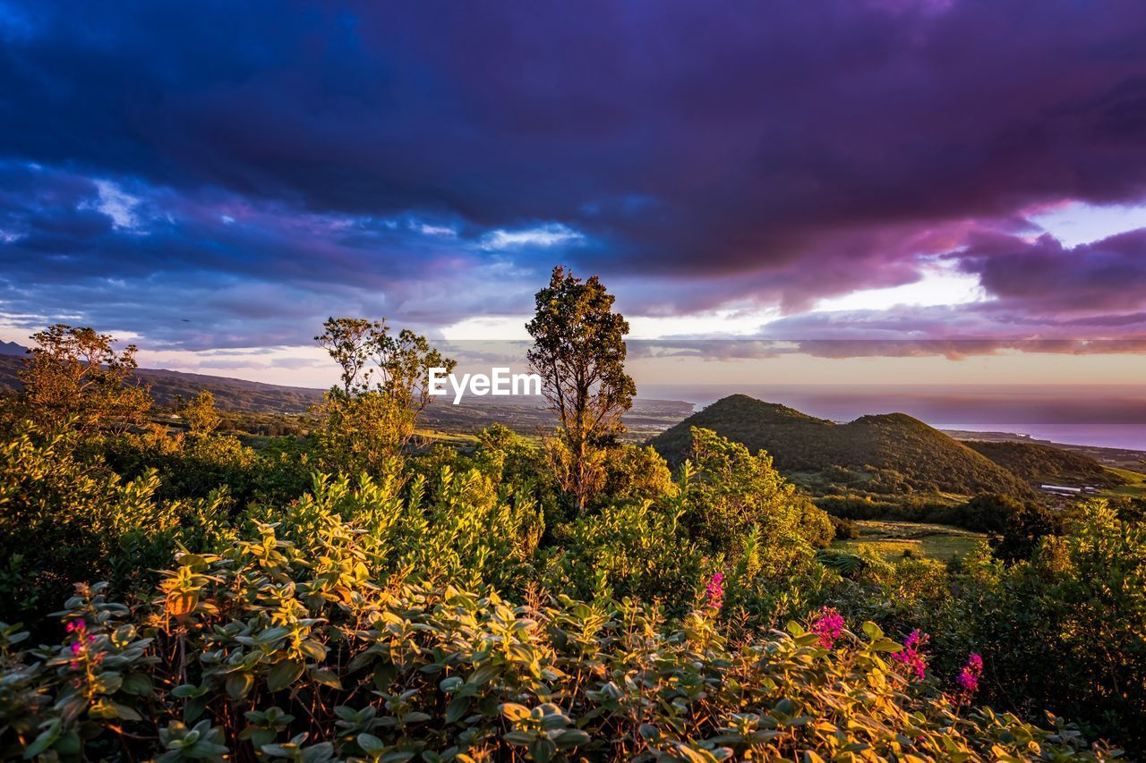 cloud - sky, sky, beauty in nature, plant, scenics - nature, tranquility, growth, nature, sunset, tranquil scene, tree, no people, flowering plant, environment, flower, land, landscape, non-urban scene, outdoors, mountain, purple