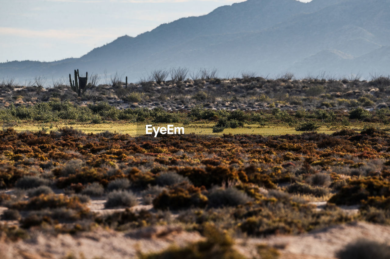 environment, mountain, landscape, nature, scenics - nature, land, tranquility, no people, tranquil scene, beauty in nature, non-urban scene, sky, day, plant, mountain range, field, selective focus, remote, outdoors, dirt, surface level, arid climate, climate