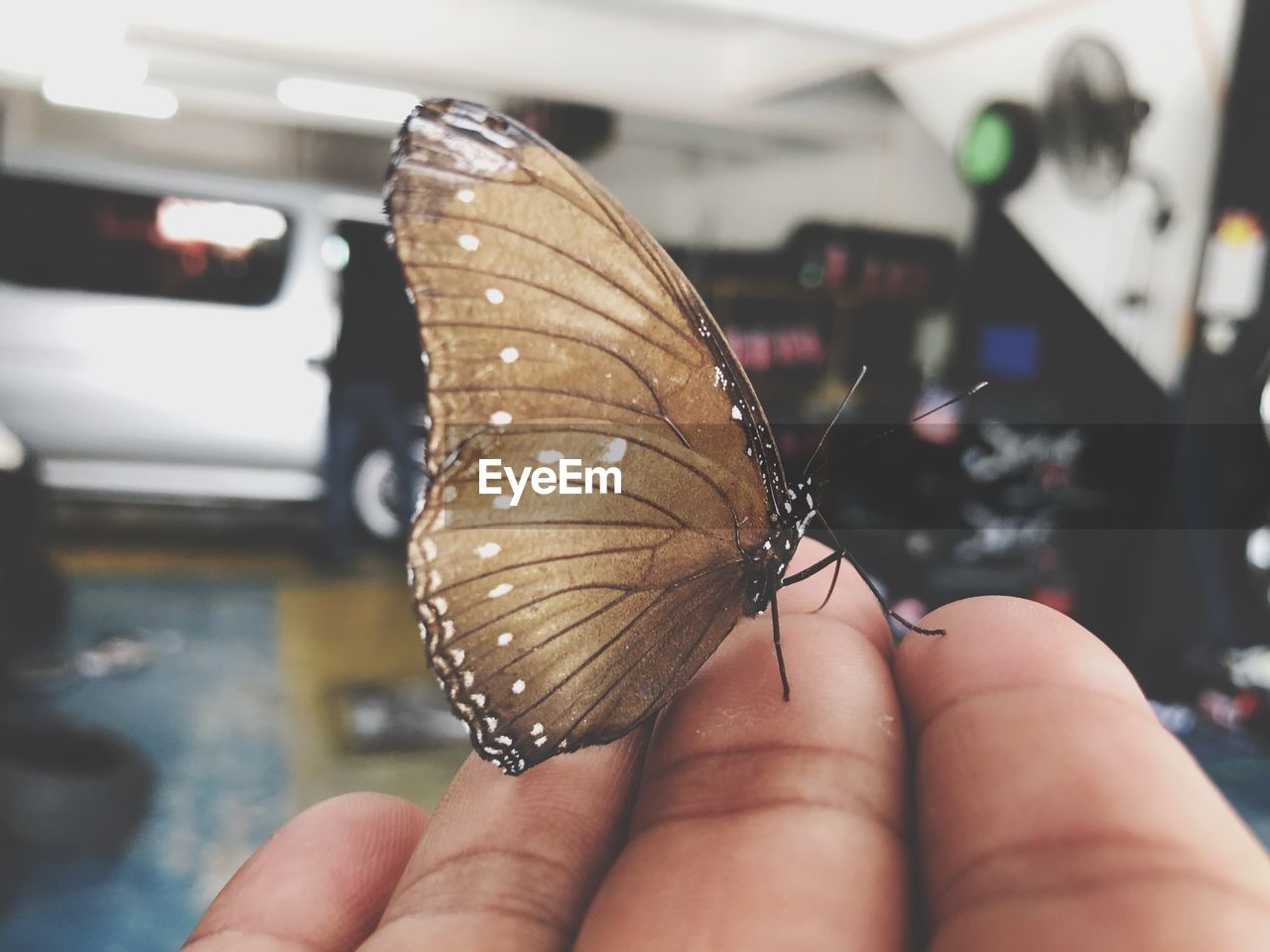 human hand, hand, human body part, real people, one person, butterfly - insect, animal wildlife, animal wing, animal themes, animal, insect, holding, focus on foreground, one animal, finger, body part, animals in the wild, human finger, invertebrate, close-up, outdoors, butterfly, nail