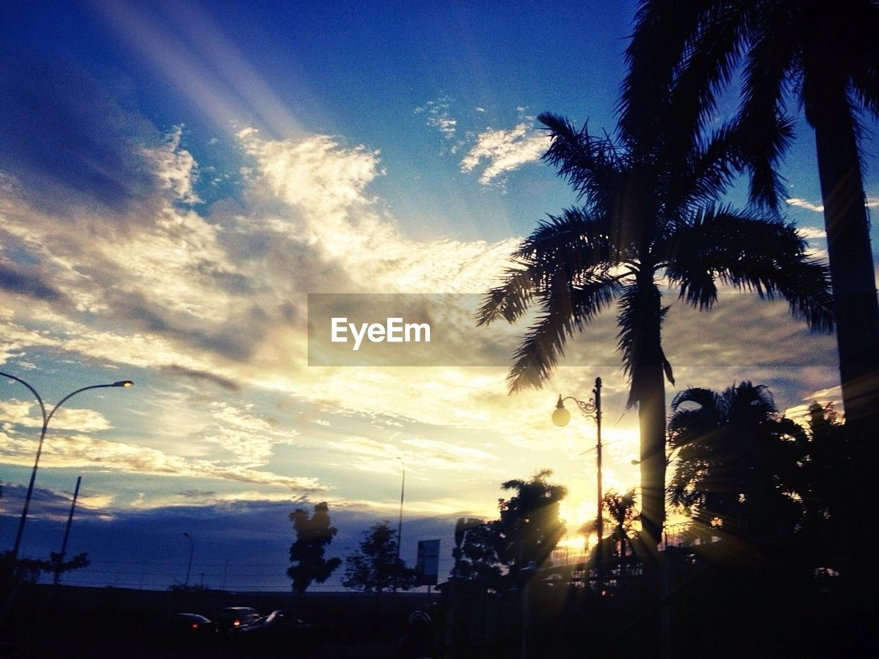 sunset, sky, silhouette, tree, cloud - sky, palm tree, nature, beauty in nature, low angle view, scenics, no people, outdoors, growth, day