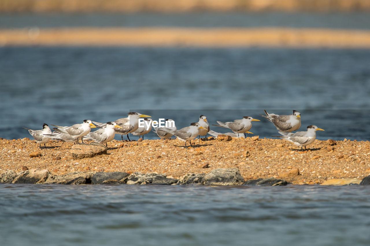 Birds perching at beach