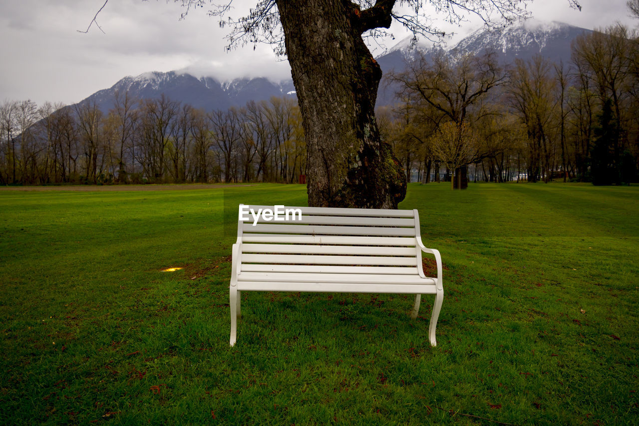 plant, tree, grass, seat, field, nature, land, beauty in nature, green color, tranquility, no people, day, tree trunk, scenics - nature, empty, growth, bench, trunk, tranquil scene, absence, outdoors