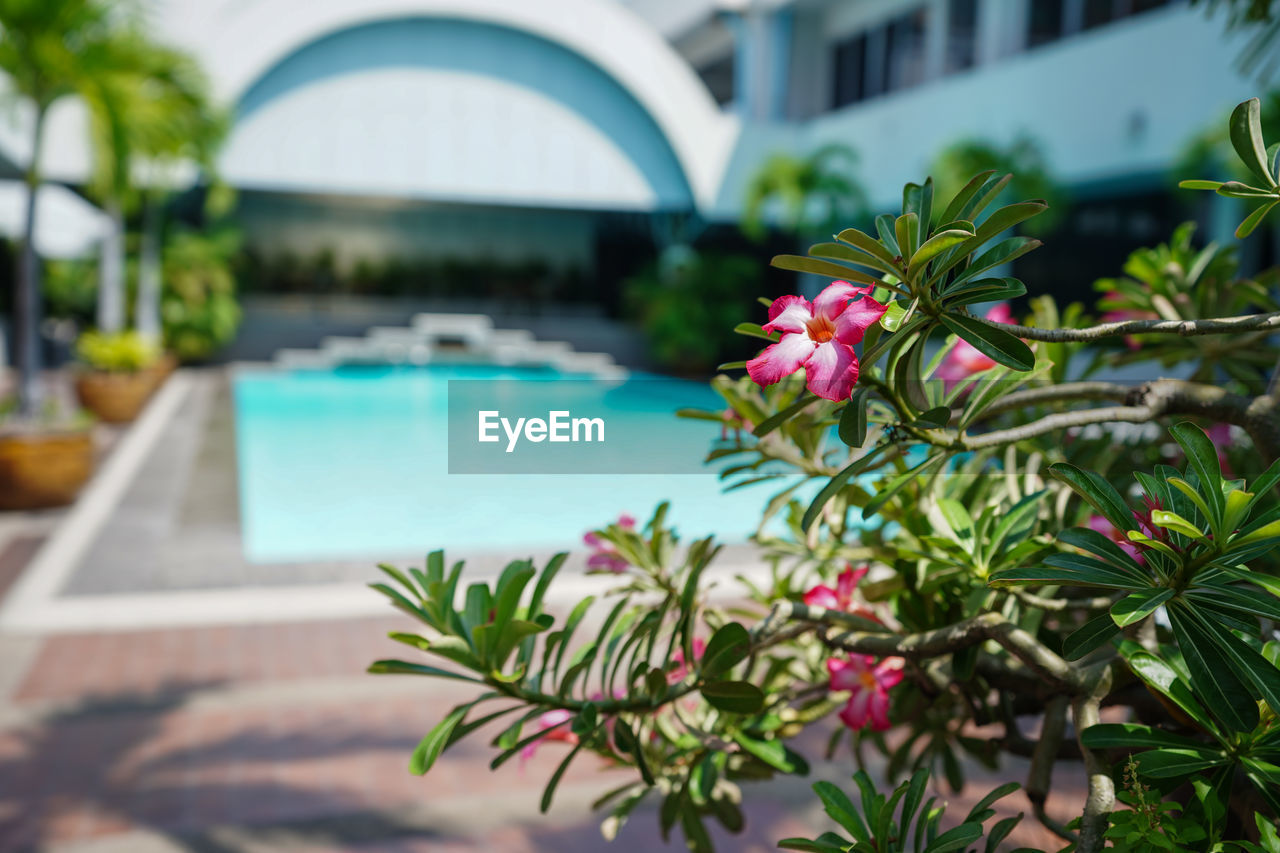 PLANTS BY SWIMMING POOL