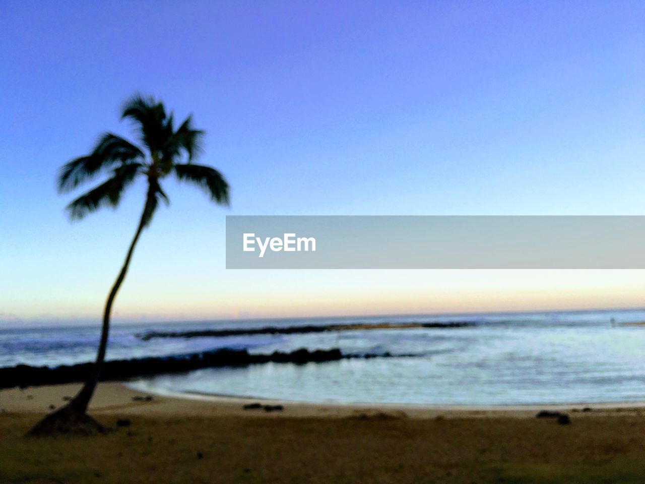 beach, sea, water, sky, land, beauty in nature, scenics - nature, palm tree, tropical climate, tree, tranquil scene, tranquility, horizon, nature, horizon over water, sunset, clear sky, plant, sand, no people, coconut palm tree, outdoors