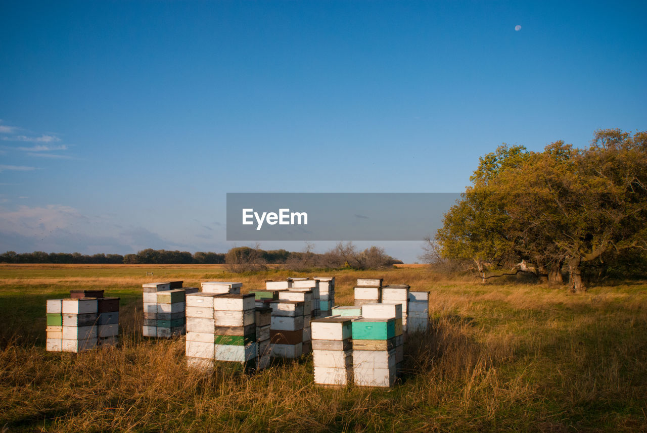 sky, plant, land, nature, beehive, field, bee, grass, apiculture, day, landscape, environment, copy space, tranquility, tree, no people, container, wood - material, box, animal, outdoors, box - container