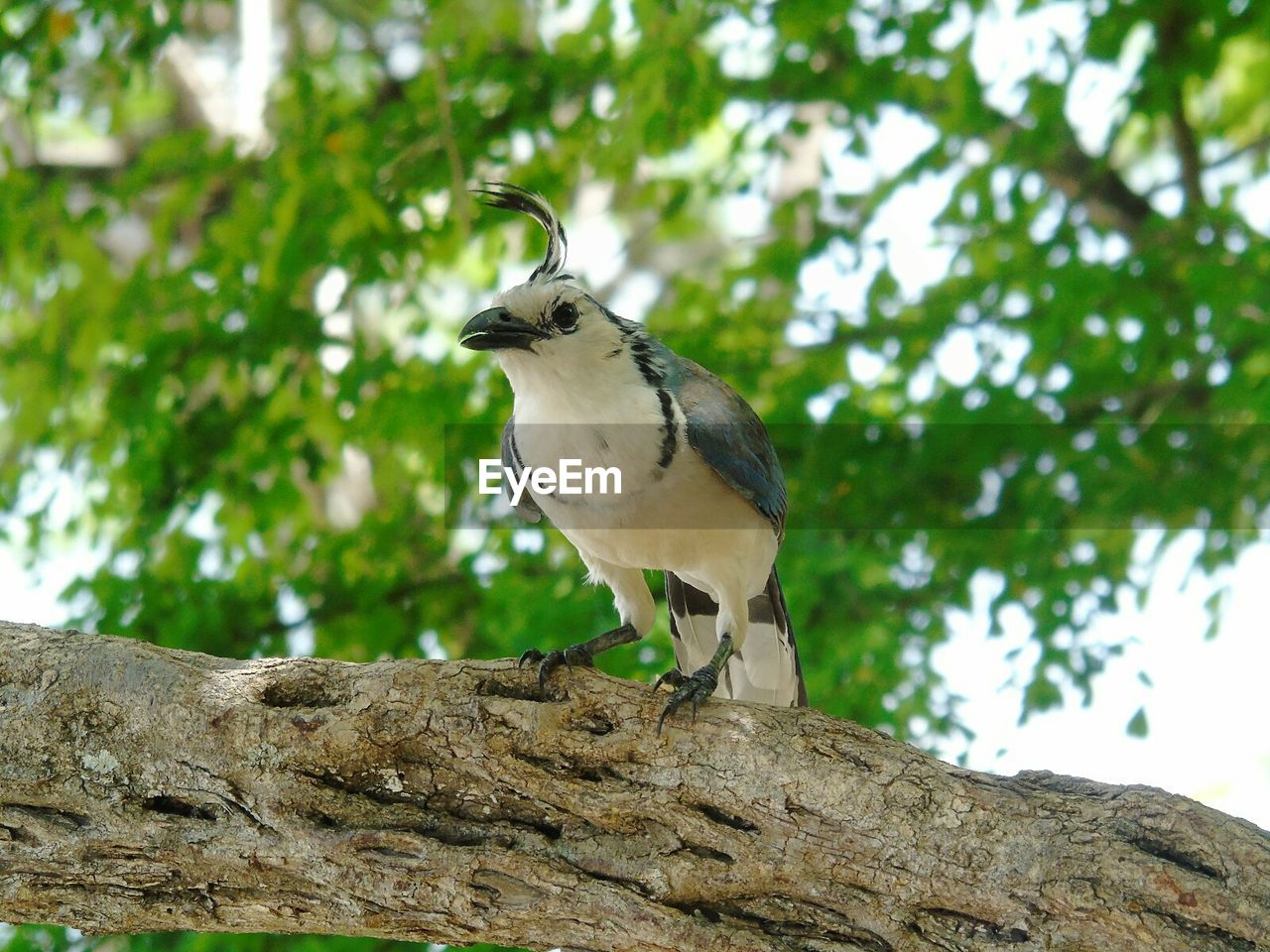 vertebrate, animal themes, animals in the wild, animal wildlife, animal, low angle view, one animal, tree, bird, perching, plant, no people, nature, branch, focus on foreground, day, outdoors, wood - material, woodpecker, sky