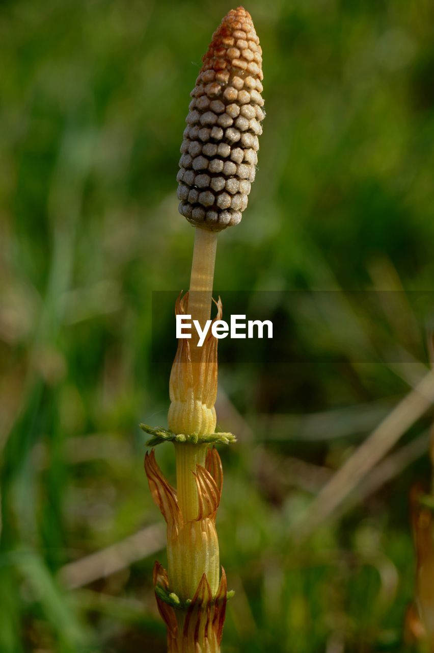 growth, plant, focus on foreground, close-up, no people, day, nature, food, green color, freshness, beauty in nature, outdoors, plant stem, field, food and drink, crop, agriculture, flower, healthy eating, selective focus