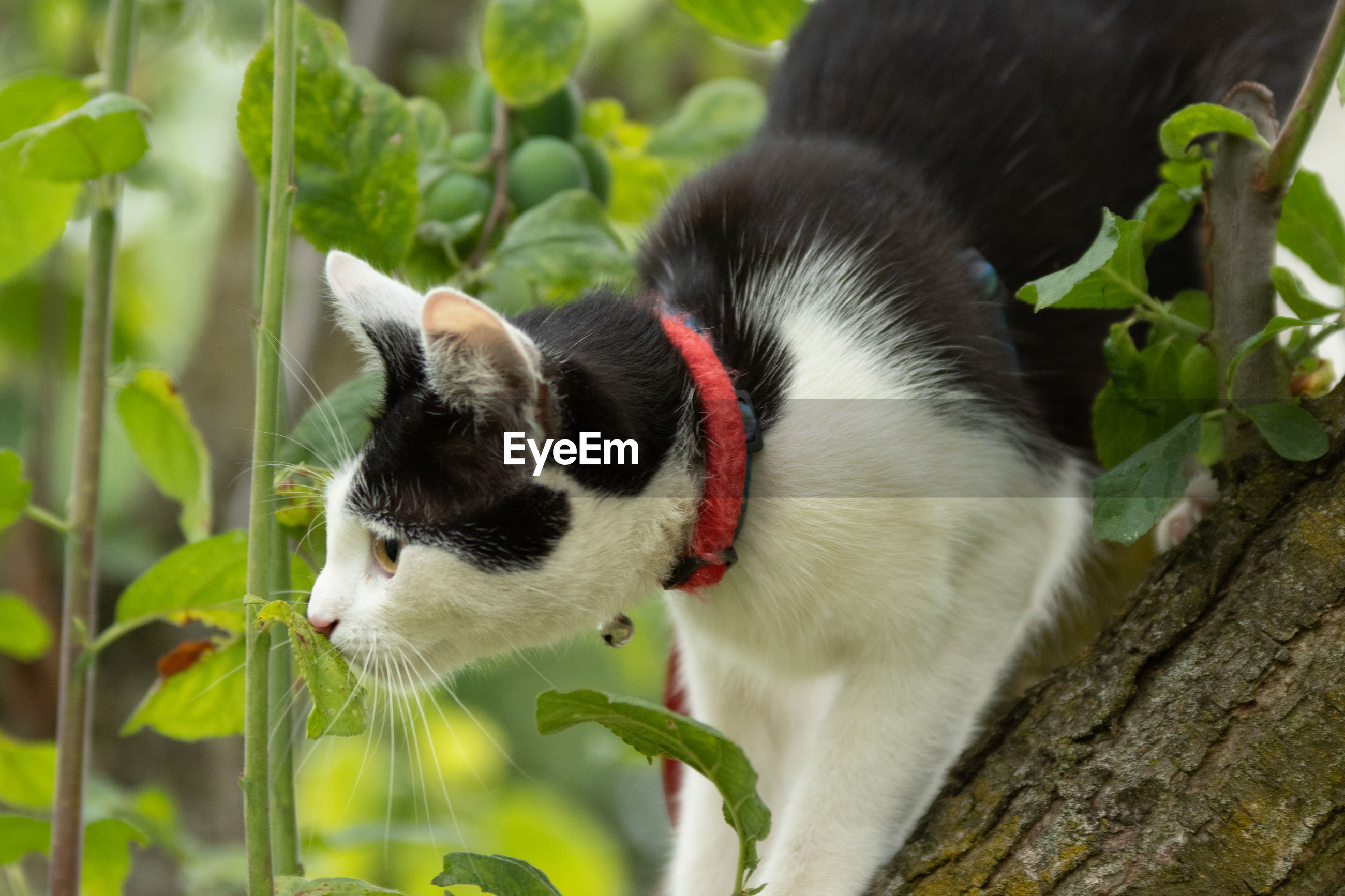 CLOSE-UP OF CAT ON THE TREE