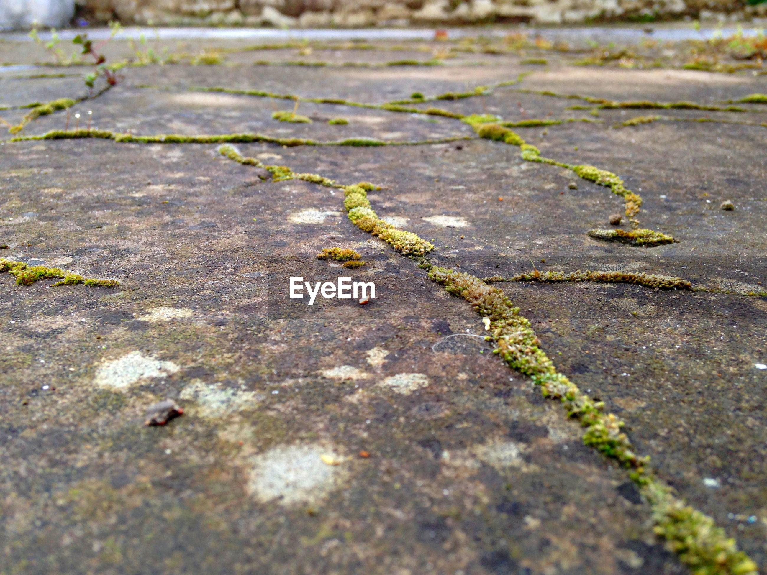 Surface level shot of moss growing on street