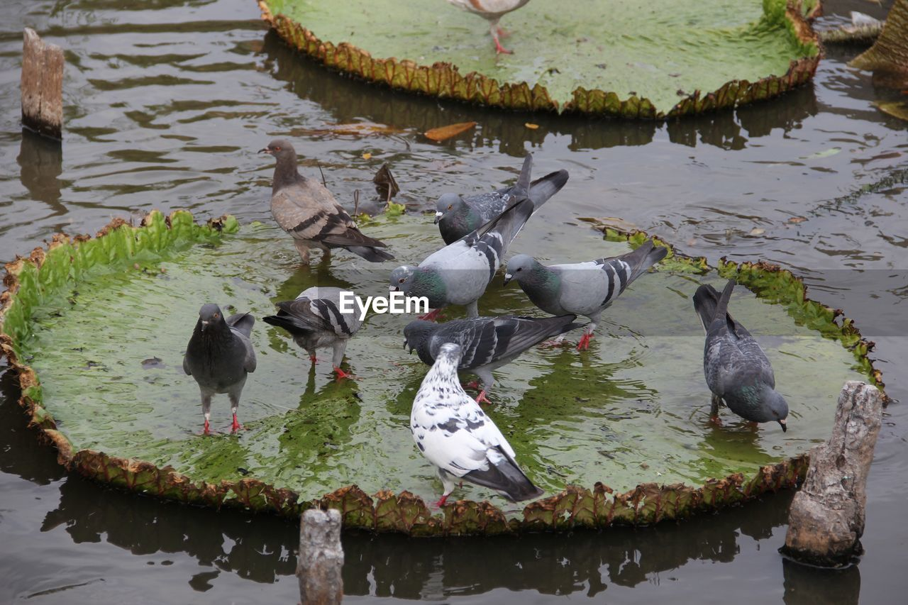 water, bird, vertebrate, lake, animal themes, group of animals, animal, animals in the wild, animal wildlife, large group of animals, day, nature, no people, reflection, beauty in nature, duck, waterfront, poultry, high angle view, flock of birds